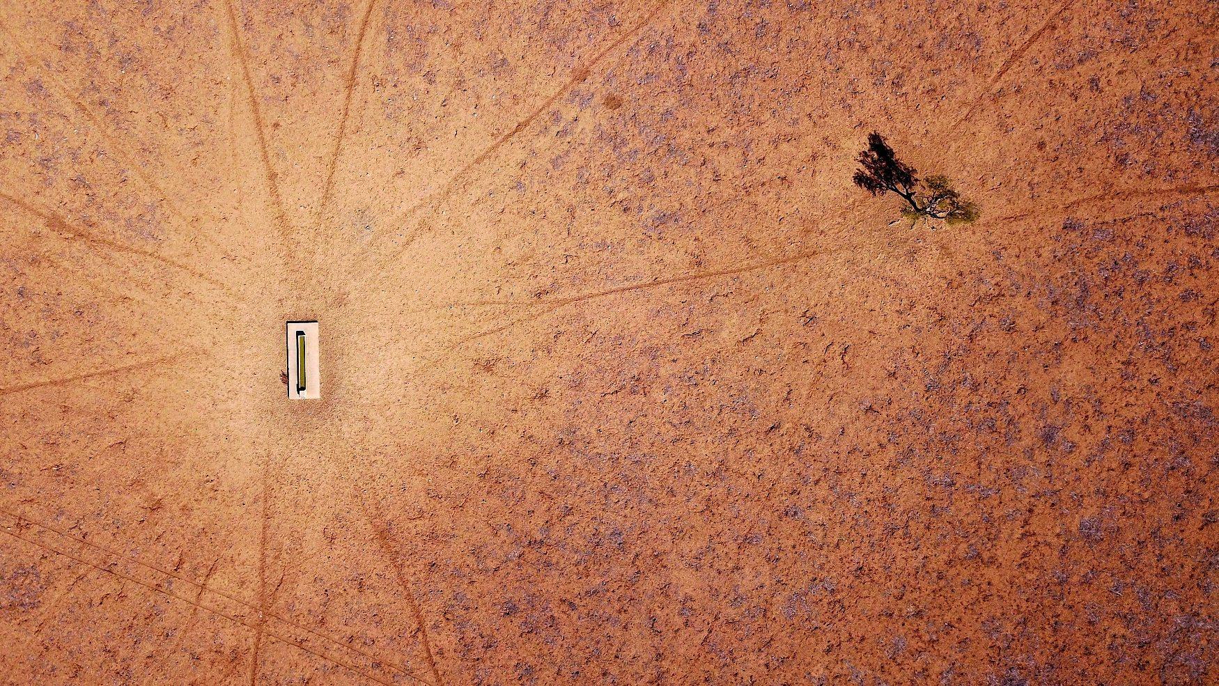Usamljeno drvo još uvijek se drži na presušenom polju u Walgettu, New South Wales