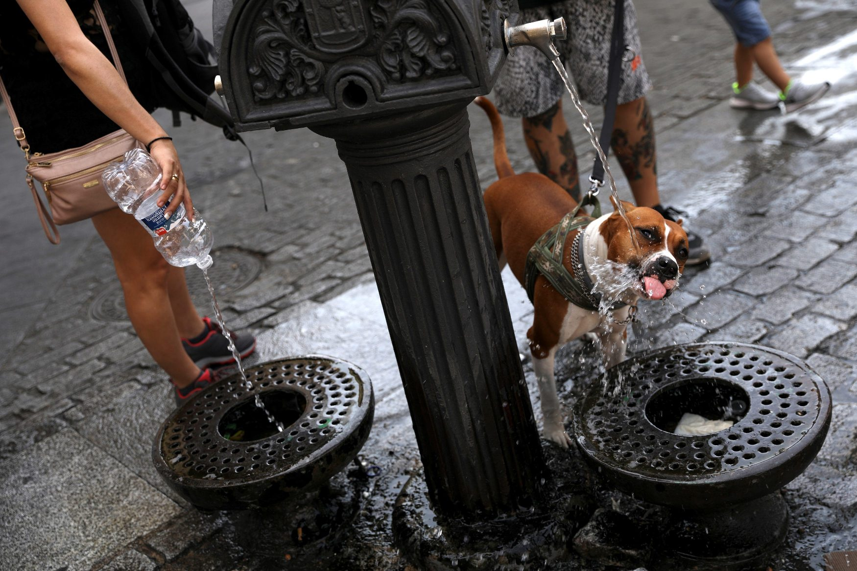 A dog drinks water from a public fountain as temperatures soar throughout the country, in Madrid, Spain, August 2, 2018. REUTERS/Susana Vera