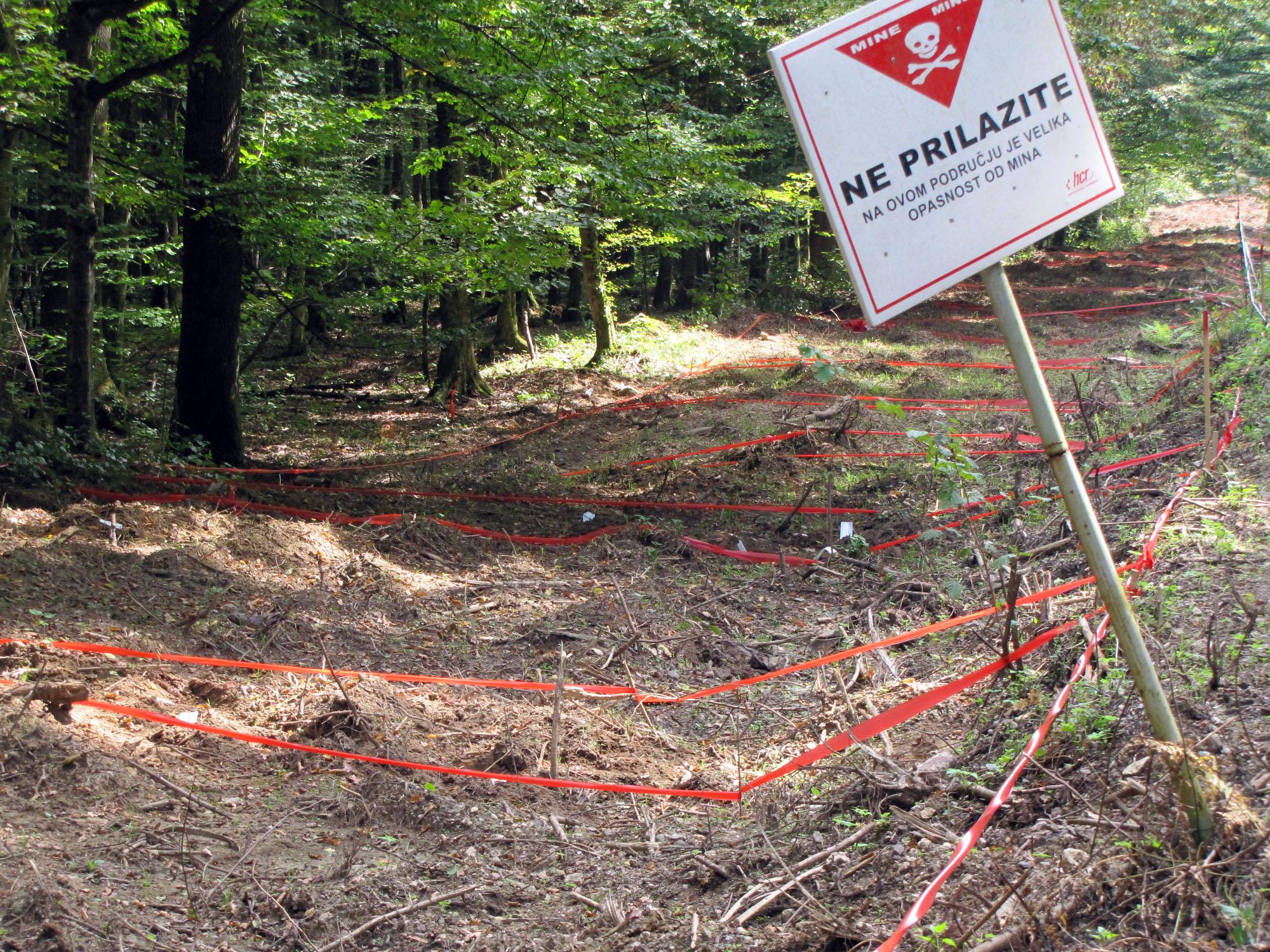 Minsko polje Kotar  šuma