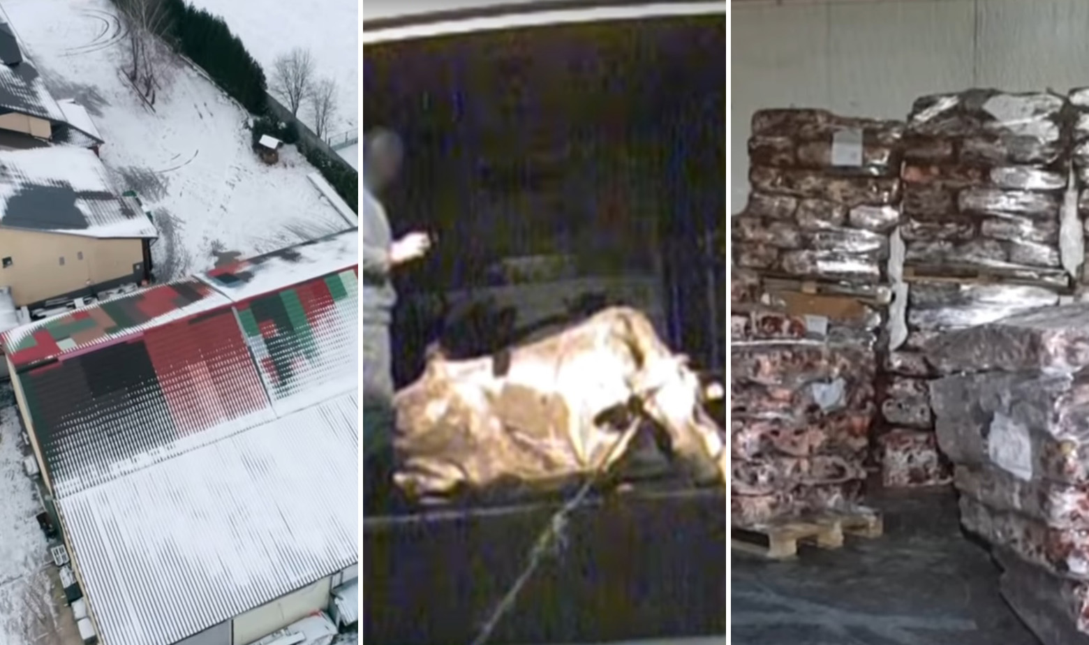 Prizori iz poljske klaonice u koju se dovode bolesne krave