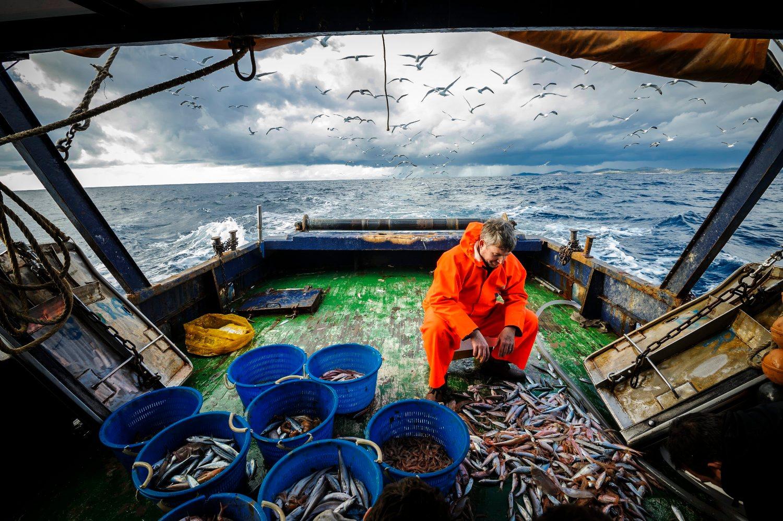 Rogoznica, 230119. Ivan Bartulovic, vlasnik ribarnice u Becu u ribolovu na koci. Foto: Niksa Stipanicev / CROPIX
