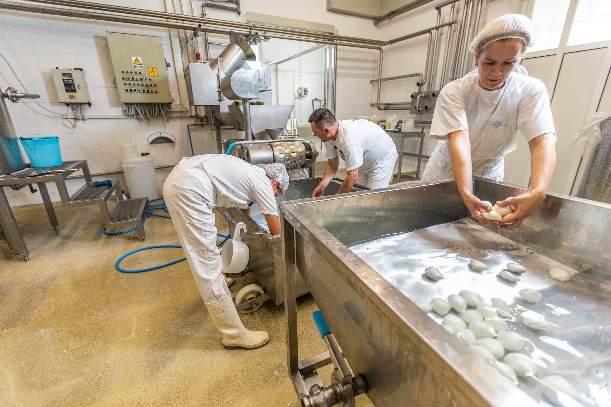 Zminj, 031019. Proizvodnja mozzarelle u Mljekari Latus. Na fotografiji: vadjenje mozzarelle iz stroja. Foto: Matija Djanjesic / CROPIX