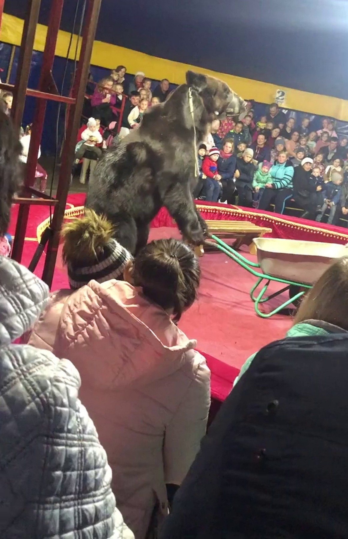 Bear attacked the trainer during the performance in the tent circus in Olonets town of Karelia republic., Image: 478855285, License: Rights-managed, Restrictions: , Model Release: no, Credit line: Anna Liesowska / east2west news / East2West News / Profimedia