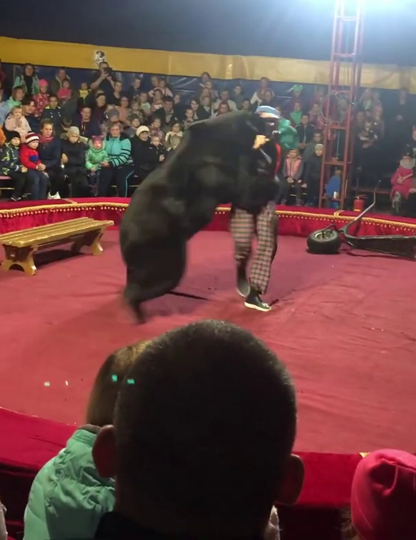 Bear attacked the trainer during the performance in the tent circus in Olonets town of Karelia republic., Image: 478855293, License: Rights-managed, Restrictions: , Model Release: no, Credit line: Anna Liesowska / east2west news / East2West News / Profimedia