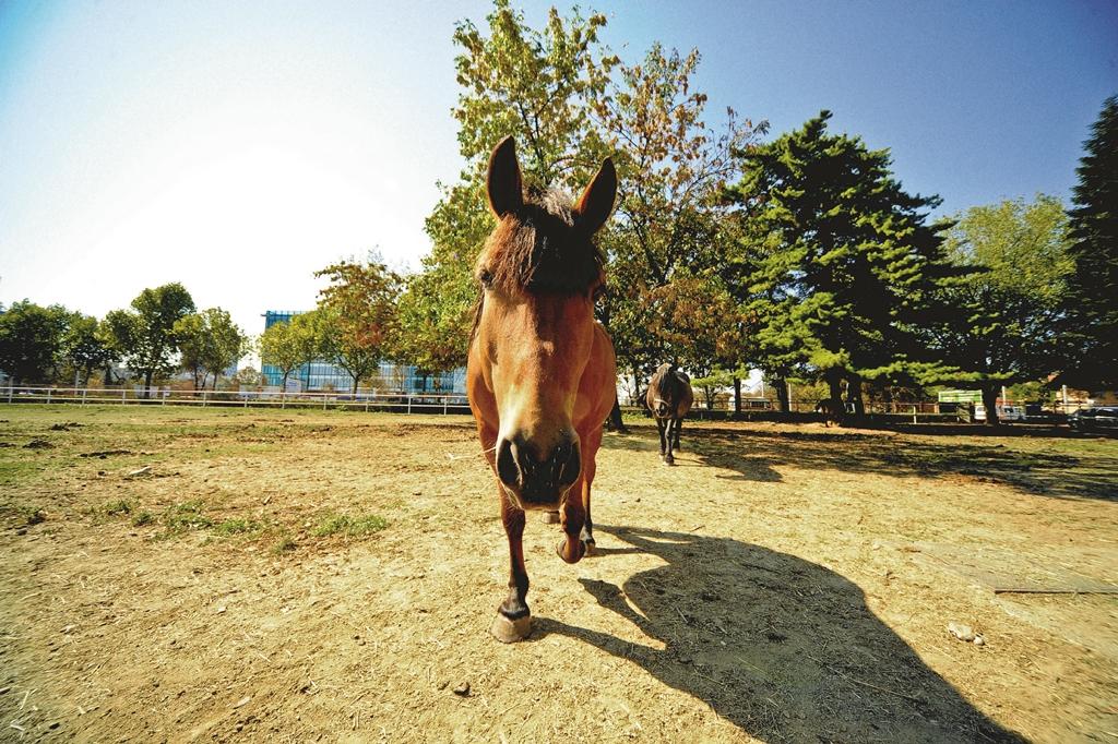 Kongres će otvoriti profesorica Renate Weller s Kraljevskog veterinarskog koledža u Londonu, stručnjakinja za zdravlje konja