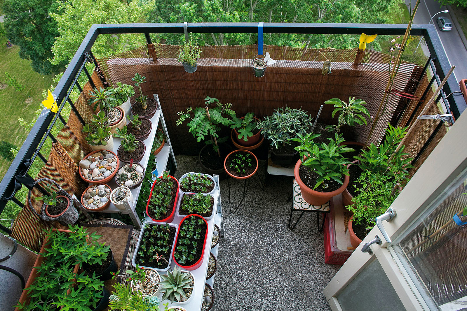 Zagreb, 120515. Mali balkon obitelji Pavlovic u Sigetu na kojem vlasnica uzgaja razne vrste vocki, bilja kaktusa i sukulenata. Foto: Berislava Picek / CROPIX