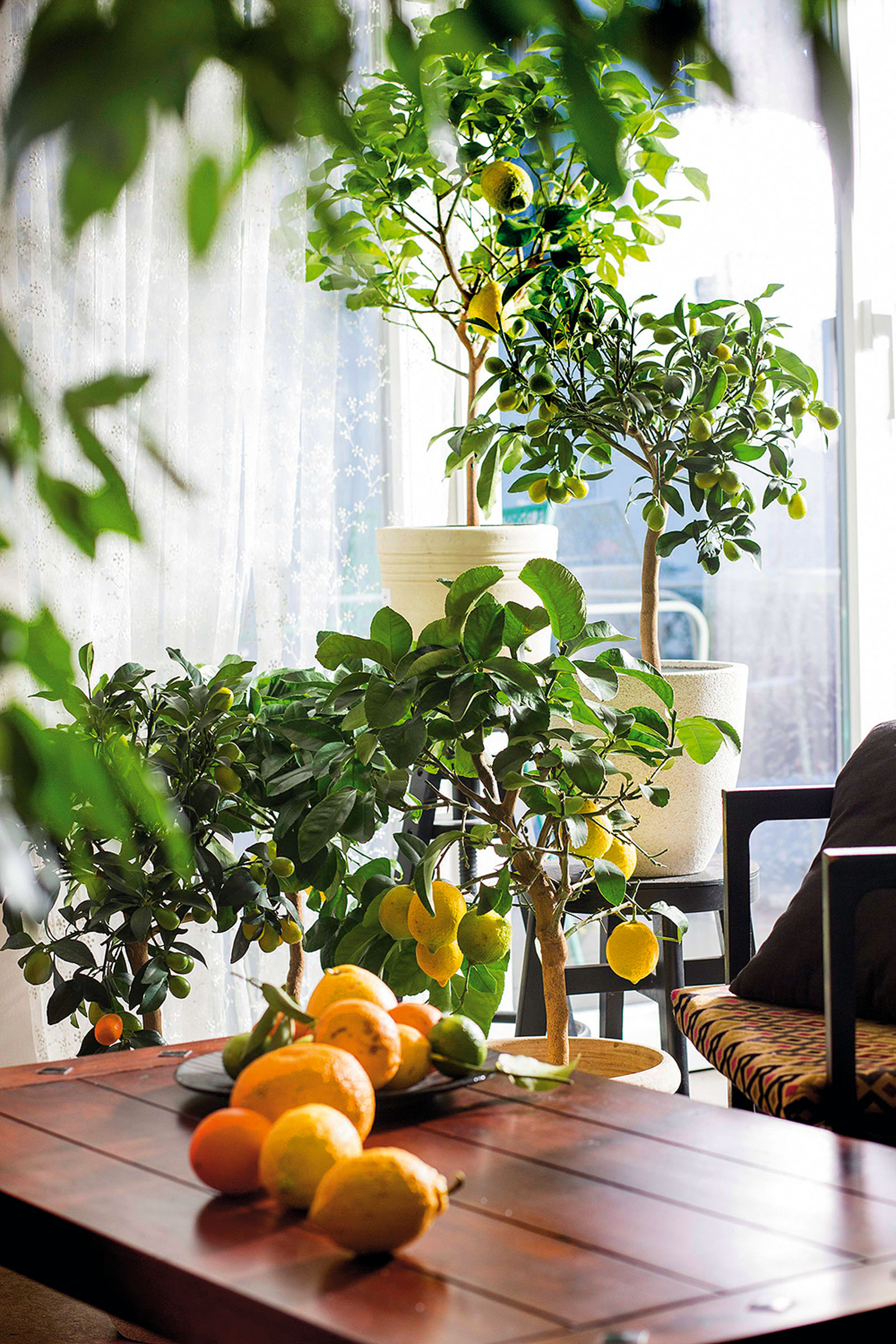 Zagreb, 180118. Andreja Coh, urbana vrtlarica napravila je temu o citrusima; agrumima. Od toga gdje ih smjetiti preko zime, kako ih njegovati, cistiti listove. Sve je snimljeno u Casablanca boutique Bed&Breakfast u Vlaskoj 92. Foto: Berislava Picek / CROPIX