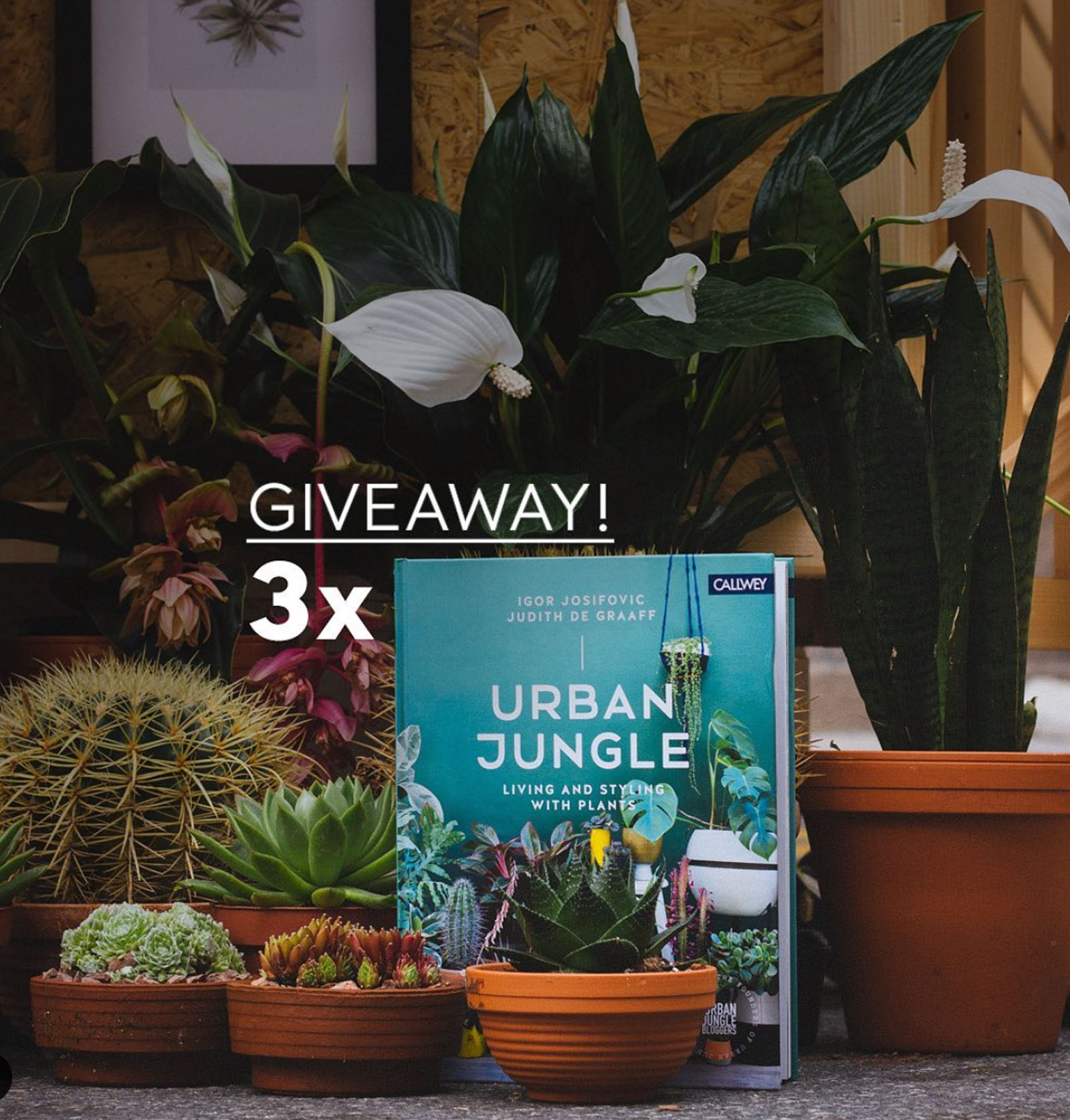 Urban Jungle 3