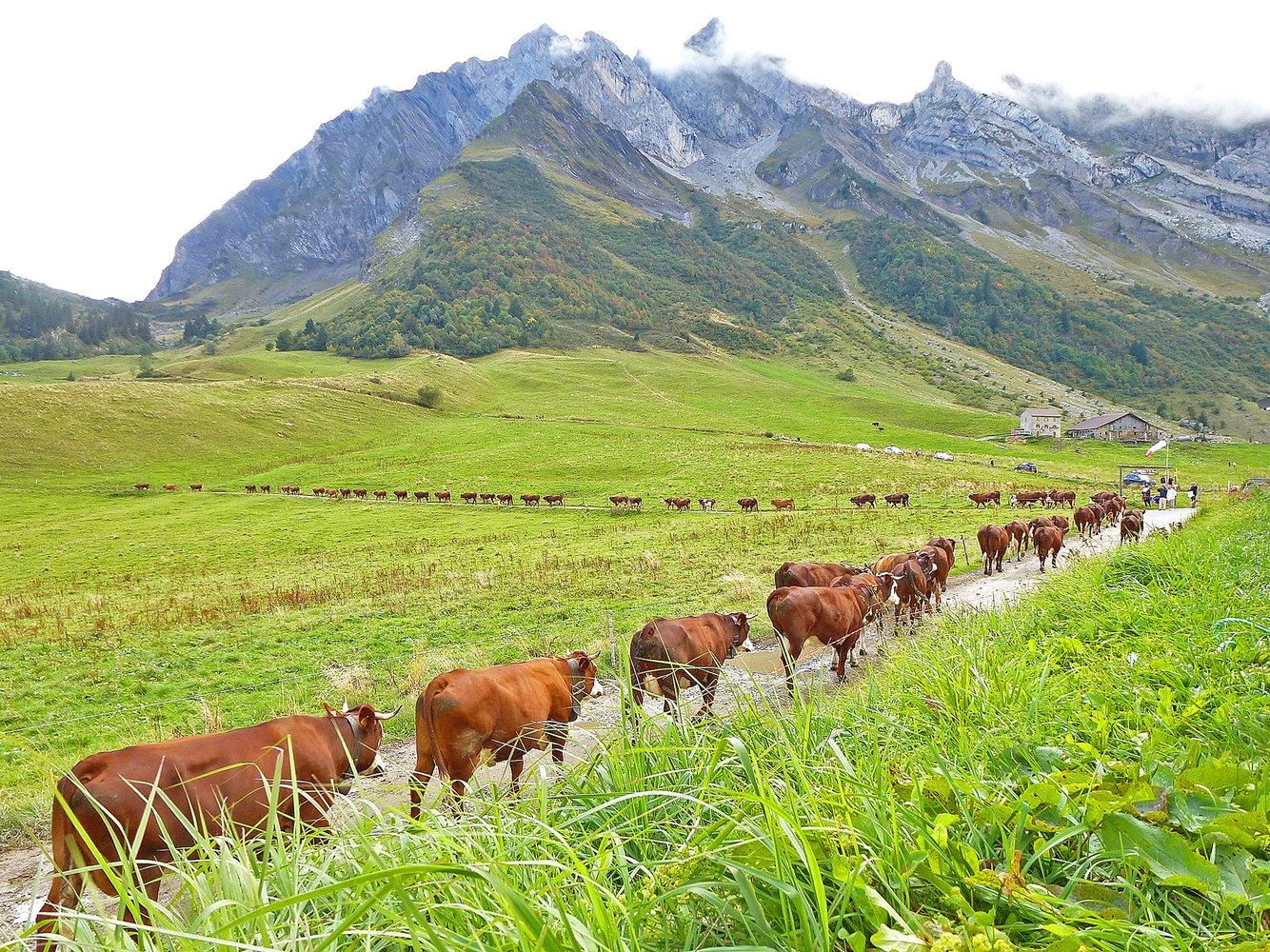 Prema istraživanju MSA-e, prosječni prihod poljoprivrednika je oko 1.250 eura mjesečno. No, jedna trećina poljoprivrednika zarađuje manje od 350 eura mjesečno.