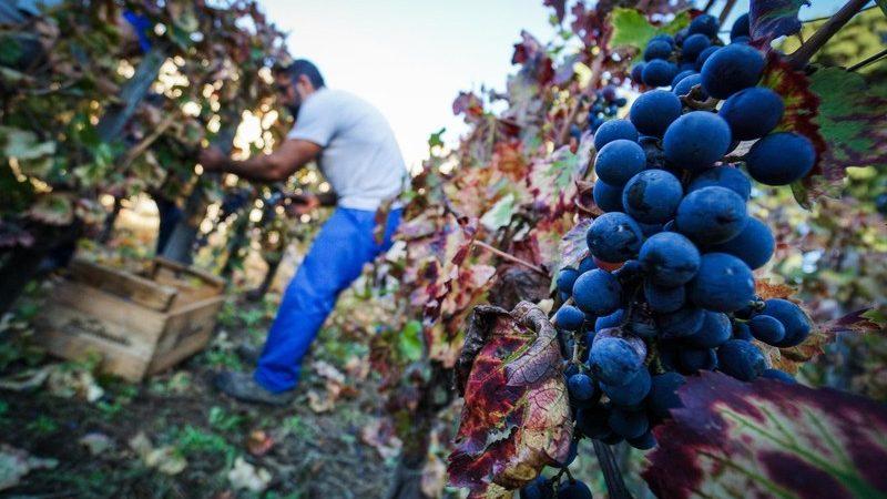 Na Sardiniji je cijena jednog hektara zemlje oko 17.000 eura, a u Liguriji 108.000 eura, što znači da u regiji Langhe jedan hektar vinograda može koštati milijune.
