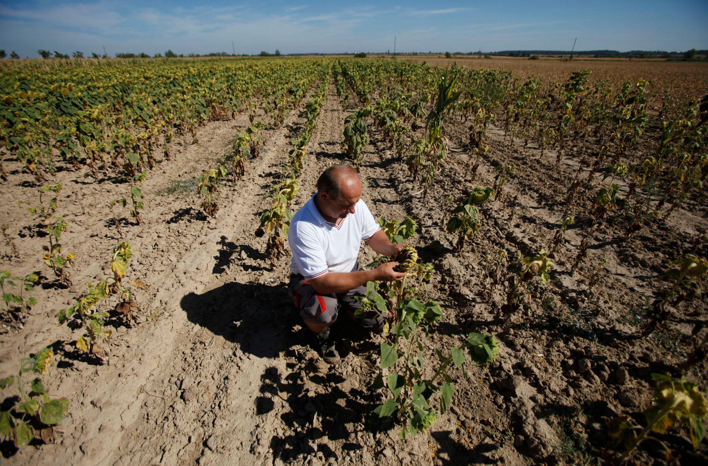 ''Poljoprivredni lobi u zapadnim zemljama je vrlo jak, a veliki poljoprivrednici vode vlastitu lokalnu politiku na štetu malih poljoprivrednika'', izjavila je biologinja Martina Šašić