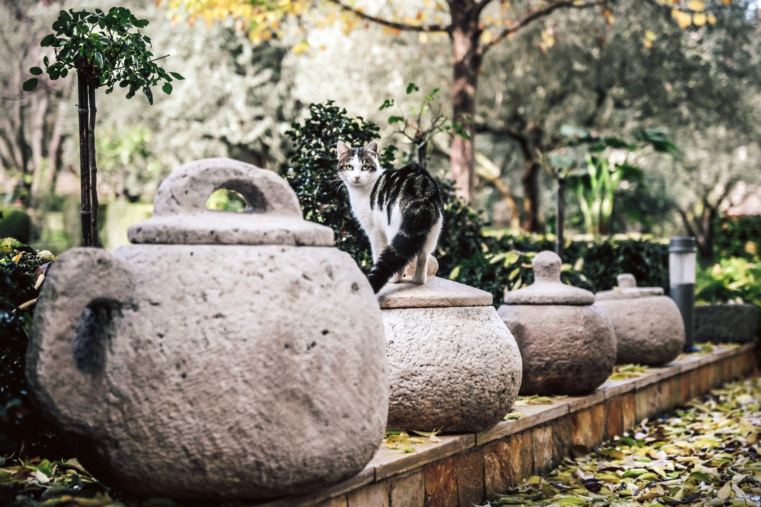 Benkovac, 031219 Reportaza o Benkovcu. Na fotografiji macka, u predivnom dvoristu obitelji Knezevic koji su vlasnici ljekarni Kastel Farm. Foto: Danijel Soldo / CROPIX