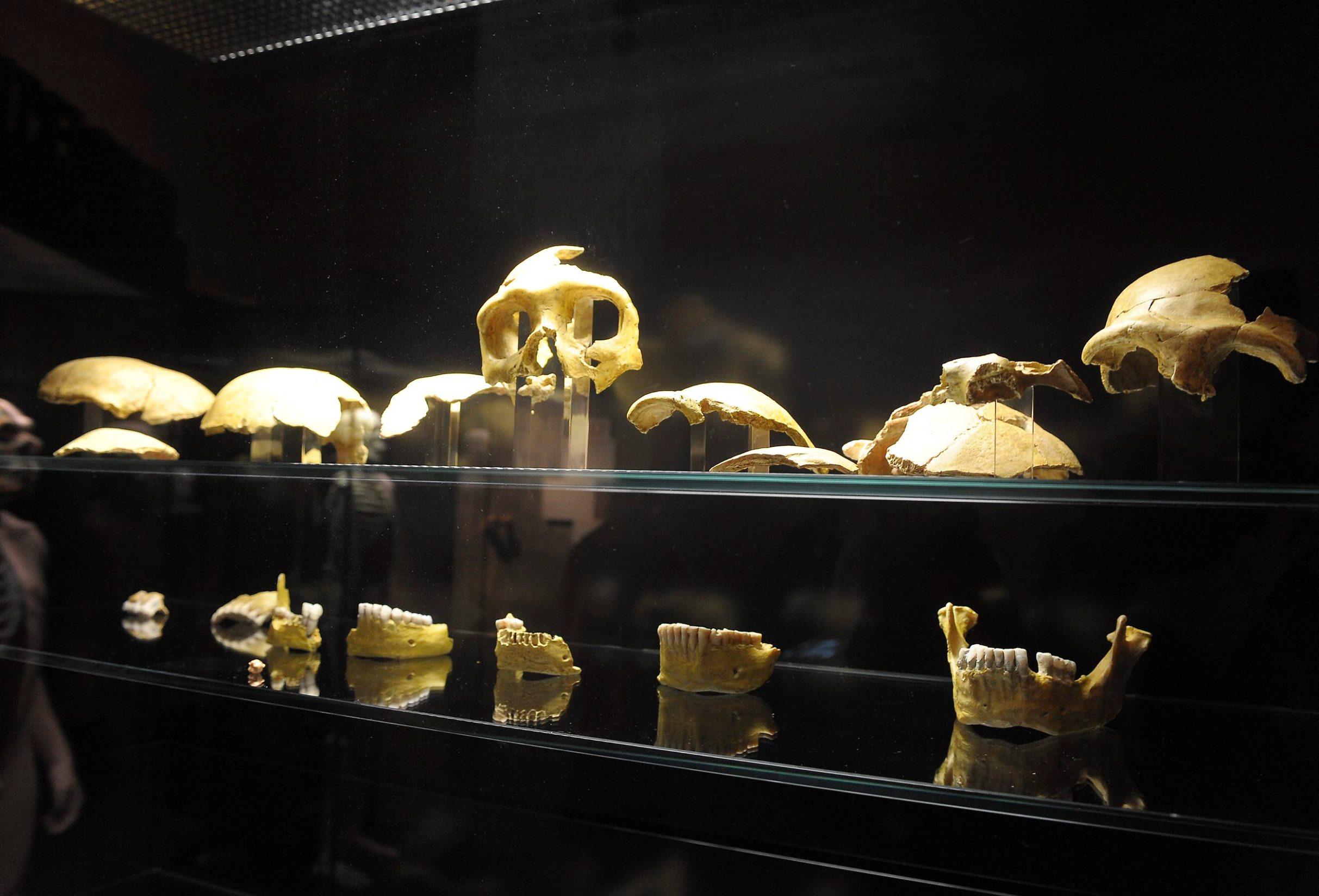 muzej_pracovjek35-080210