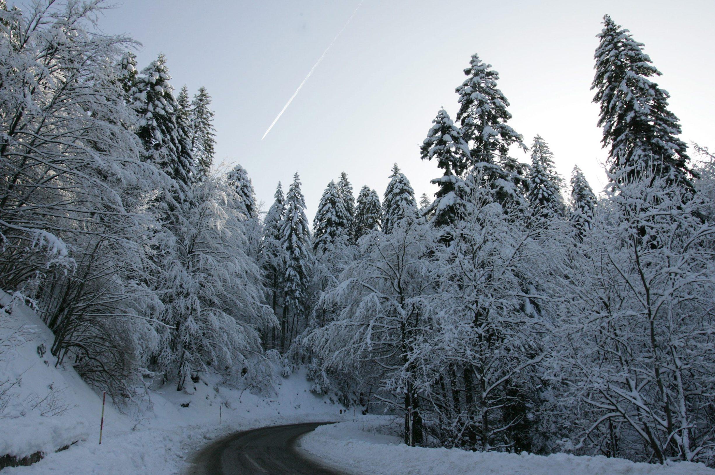 Crni lug, 130109. U Crnome lugu, mjesto u Gorskom Kotaru, proteklih dana zabiljezena najniza temperatura u Hrvatskoj od -24 celzijevih stupnjeva. Danas je puno toplije i temperatuta je oko nule. Cesta izmedju Gornjeg jelenja i Crnog luga je potpuno ociscena, a promet je slab. Foto: Zeljko Sop / CROPIX