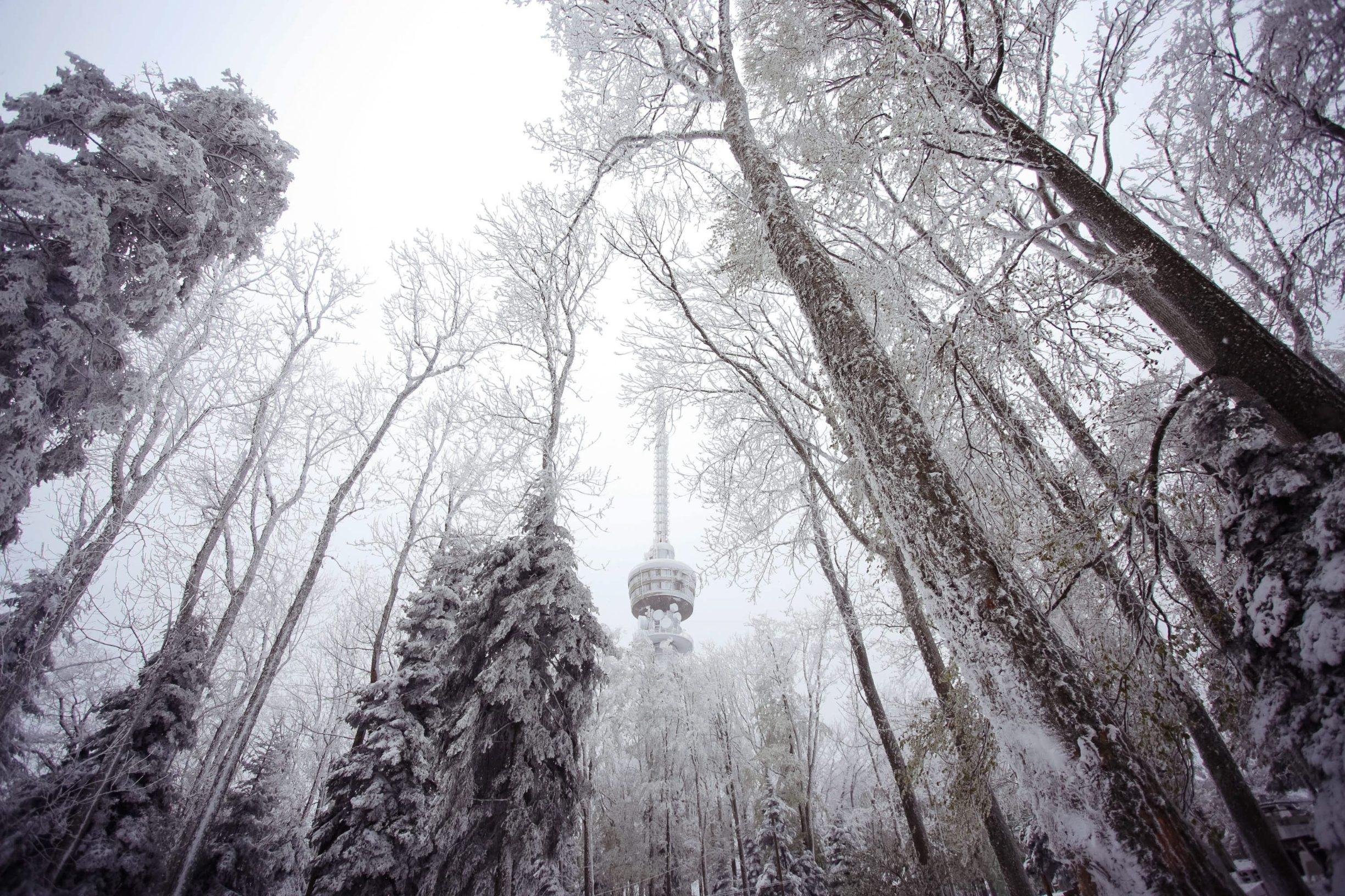 Zagreb, 060519. Sljeme. Vrh Medvednice zabijelio je snijeg. Na fotografiji: snijeg. Foto: Marko Todorov / CROPIX