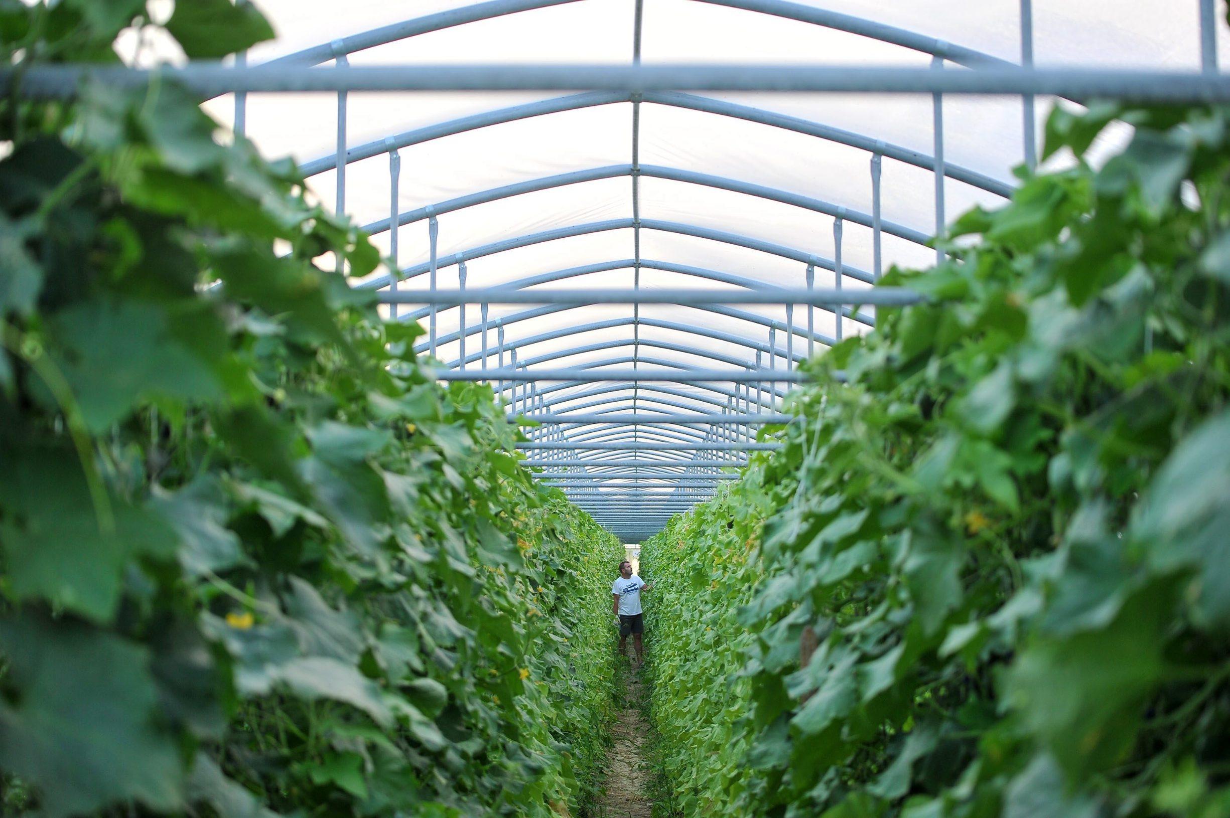 Poljoprivrednici su objeručke su prihvatili poticajne mjere koje im se nude za očuvanje okoliša bez puno truda i rada, a ekološke mjere ne zadovaljavju ni velike farmere koji su u utrci za profitom puno uložili u proizvodnju hrane na jedan drugi način