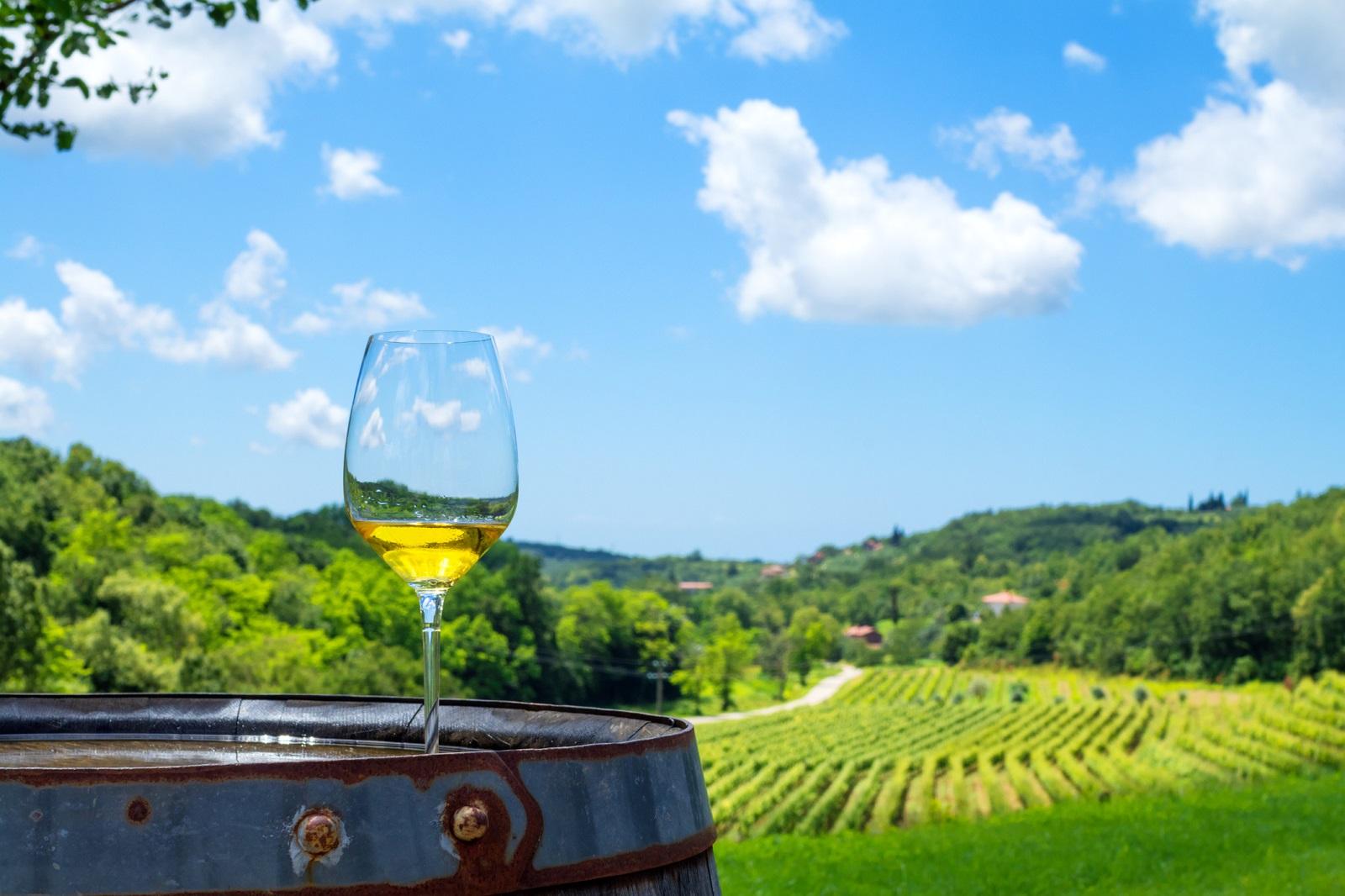 glass of white wine on vineyard in Istria, Croatia.