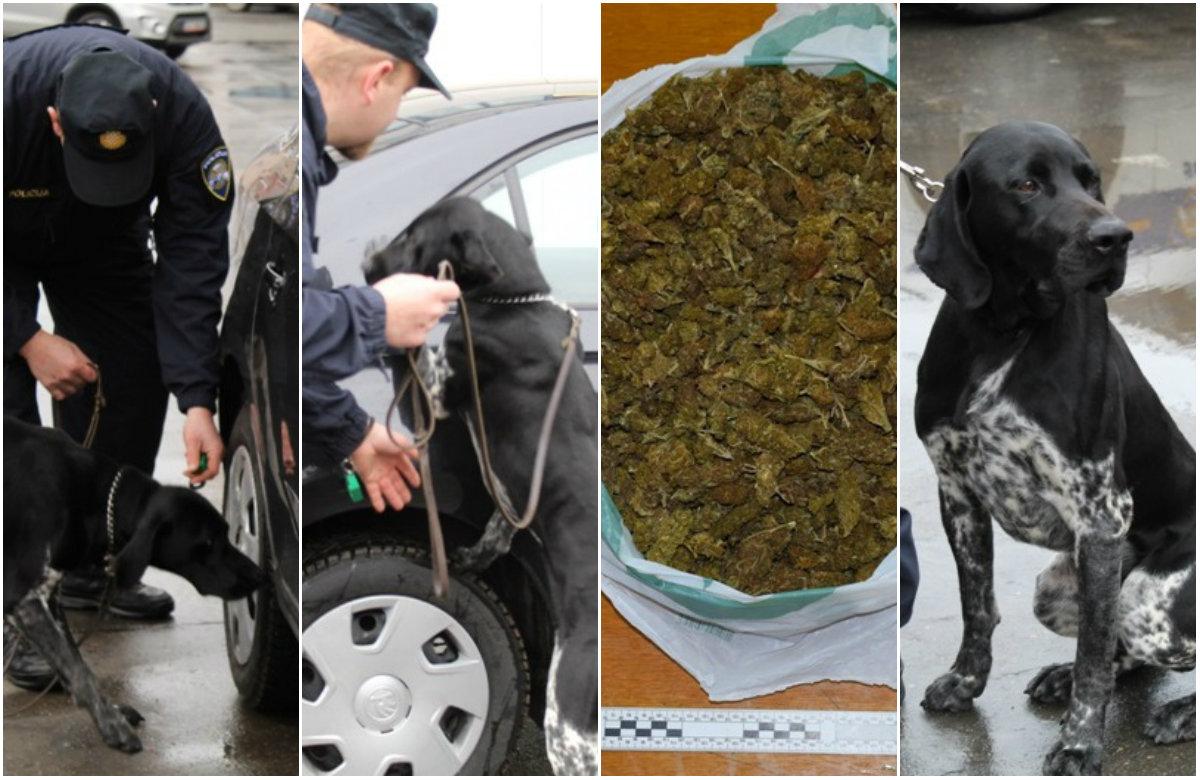 Policijski pas za prepoznavanje droga, Duks