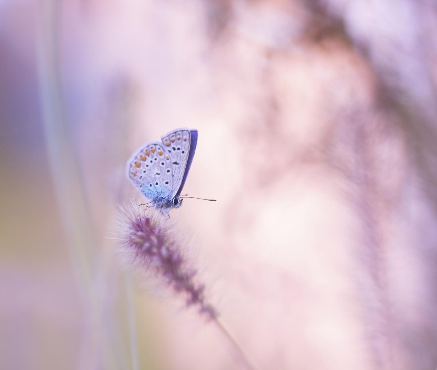 Poput leptira - dobili smo krila i napokon krenuli djelovati.