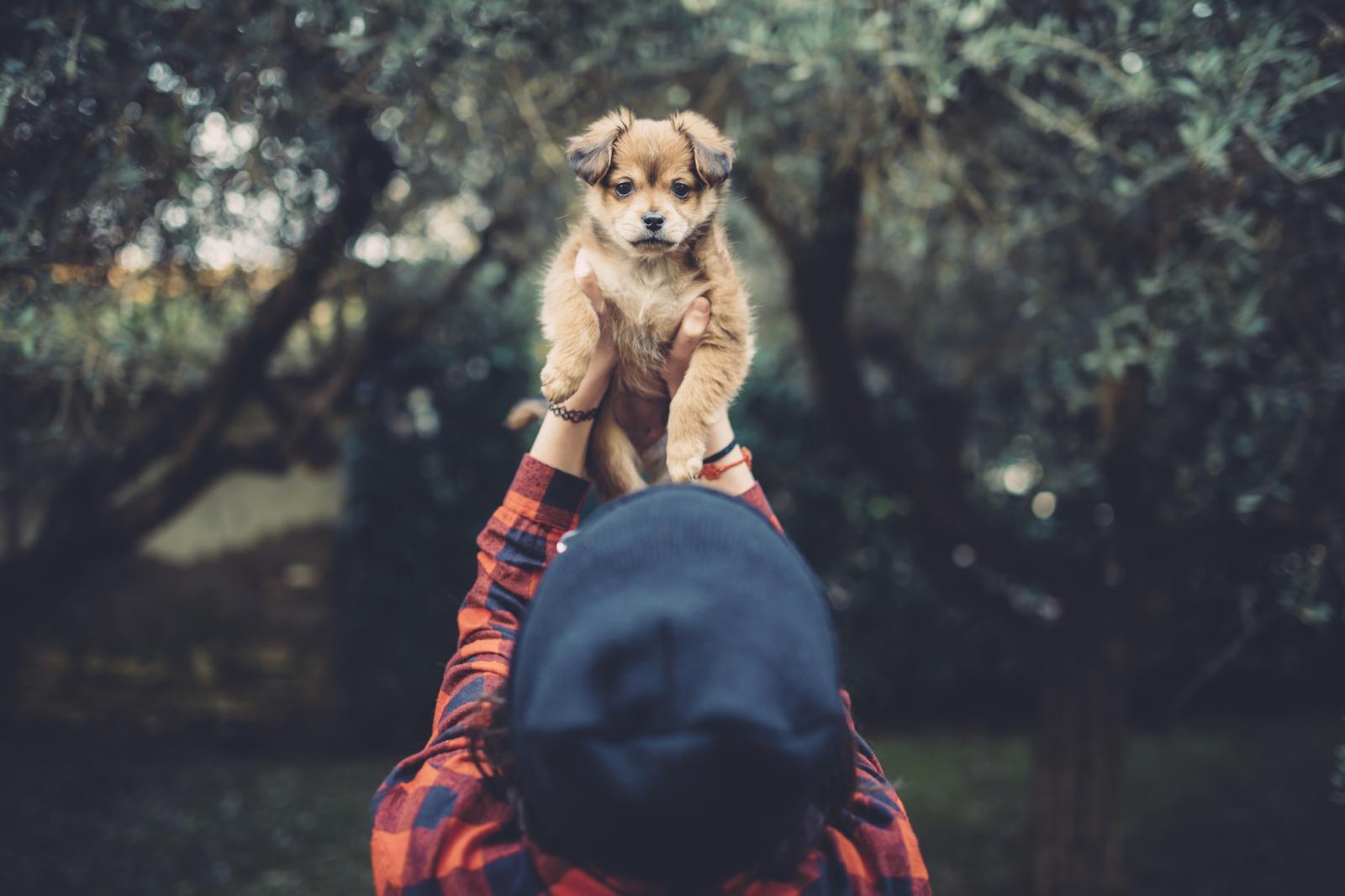 Pasmina je samo orijentir za ponašanje psa  u odrasloj dobi, mnogo toga ovisi i o genima, i o vama.