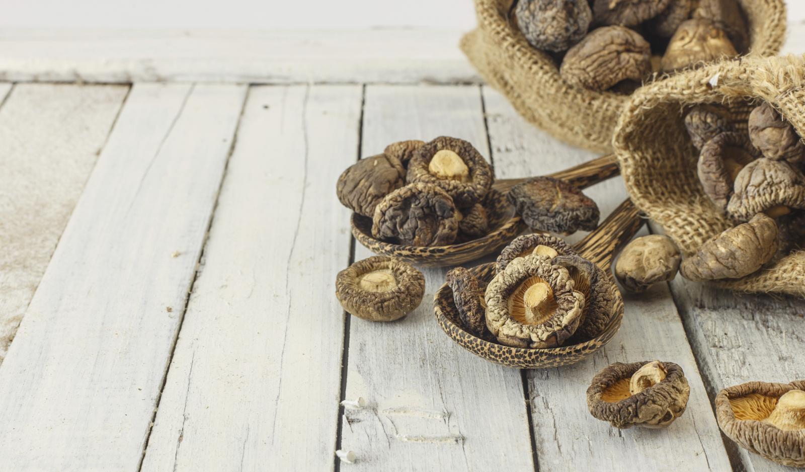 Pokazalo se kako ekstrakti shiitake i zec gljive značajno smanjuju prirodni gubitak koštane mase u najvažnijem trabekularnom dijelu kralježnice.