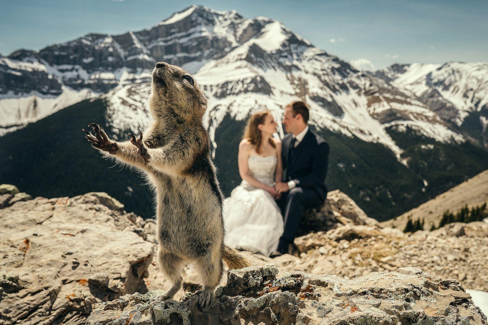 Kad bi mogla govoriti, što mislite da bi vjeverica poručila mladencima?