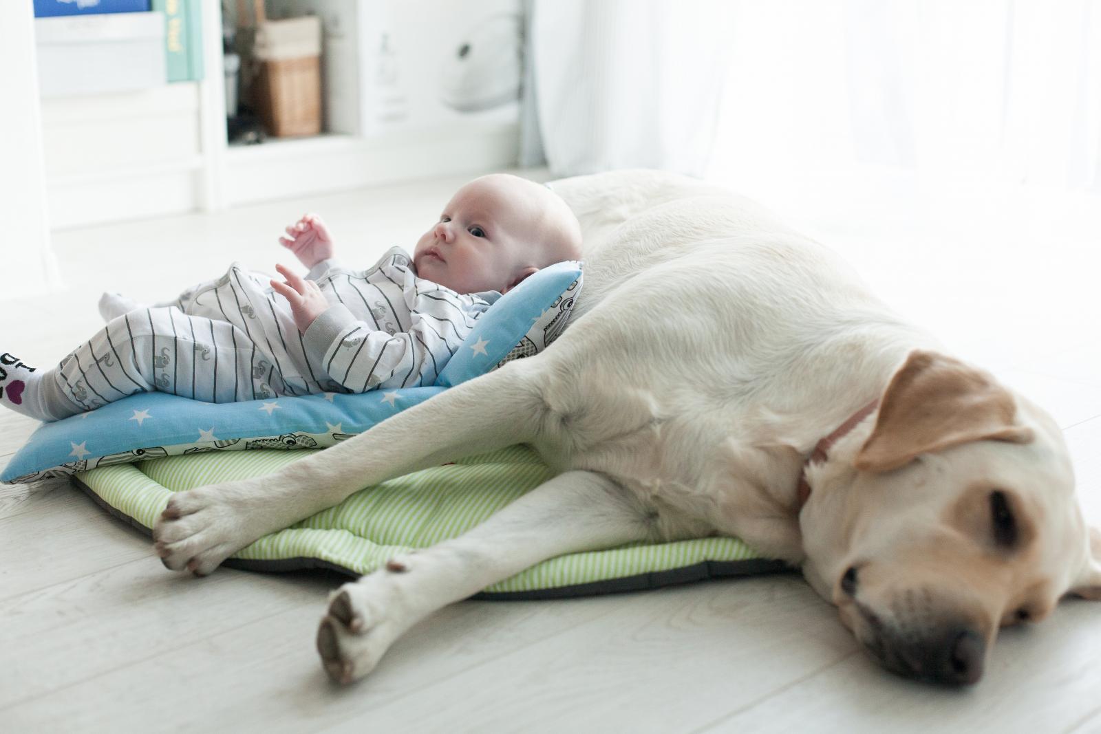 Naš bebaš tek je s tri mjeseca skužio da s nama živi i Hila...