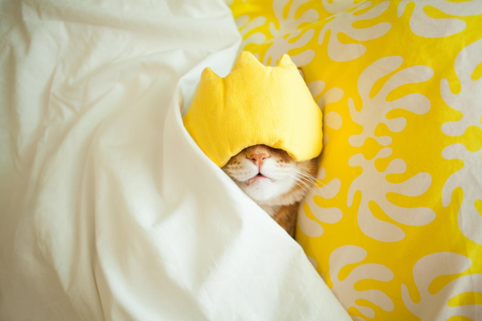 Mnoge će se mačke skrivati pod krevetom ili namještajem, ponekad danima. Kad je dovedete kući, smjestite je u jednu sobu i pustite da prvo istraži novo mjesto. Ne čudite se ako vam završi u krevetu.