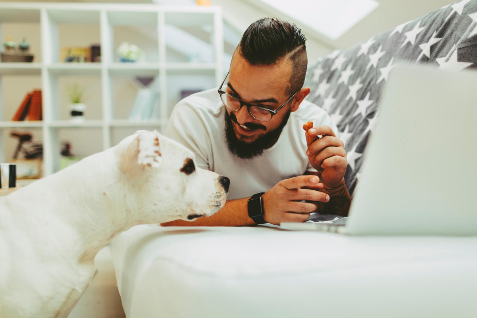 Kada se pas useli u novi dom, otvoren je za učenje novih pravila i upoznavanje novih ljudi.