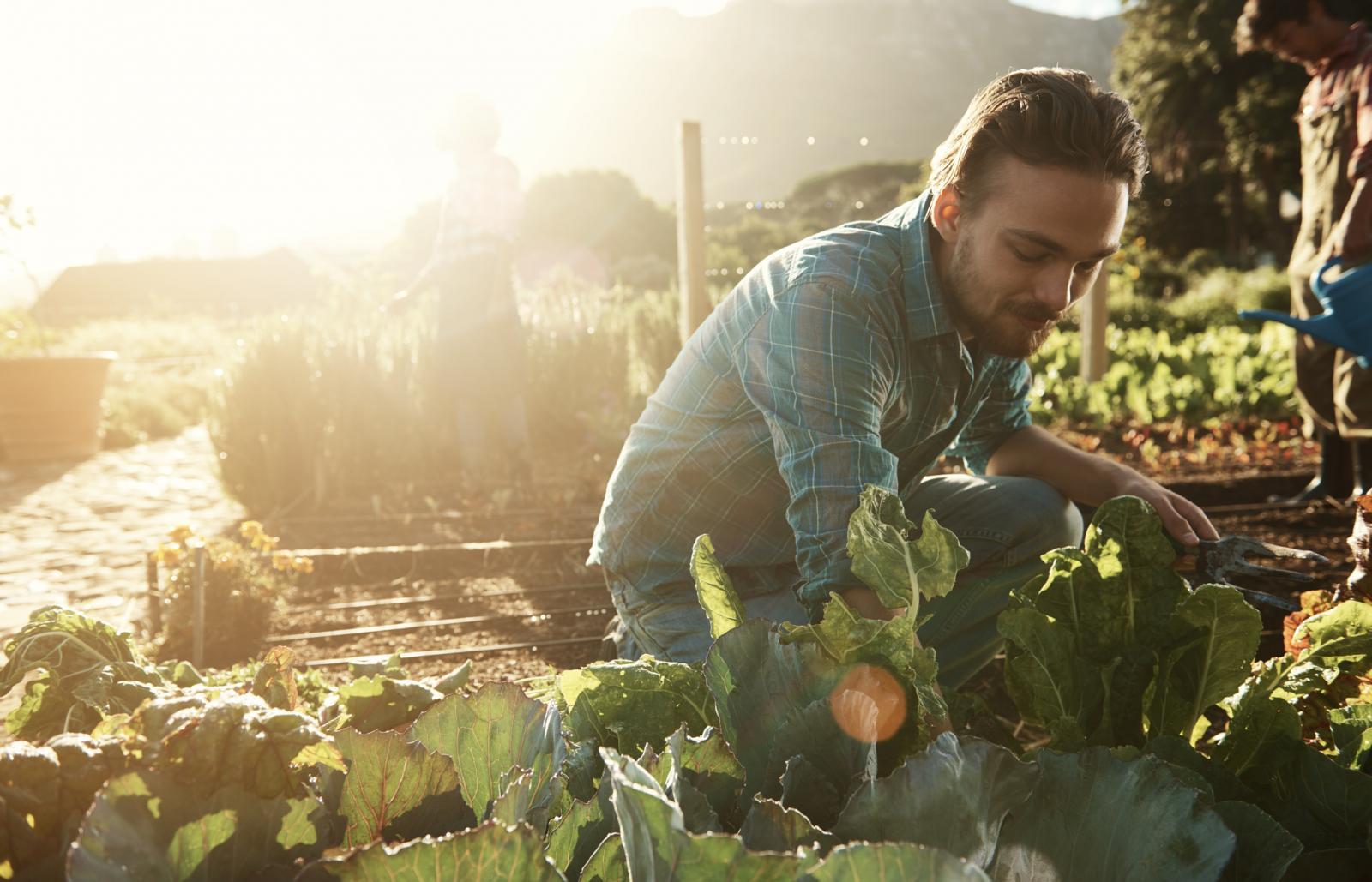 Tek onda kada budemo imali svoj komadić vrta bit ćemo sigurniji što jedemo...