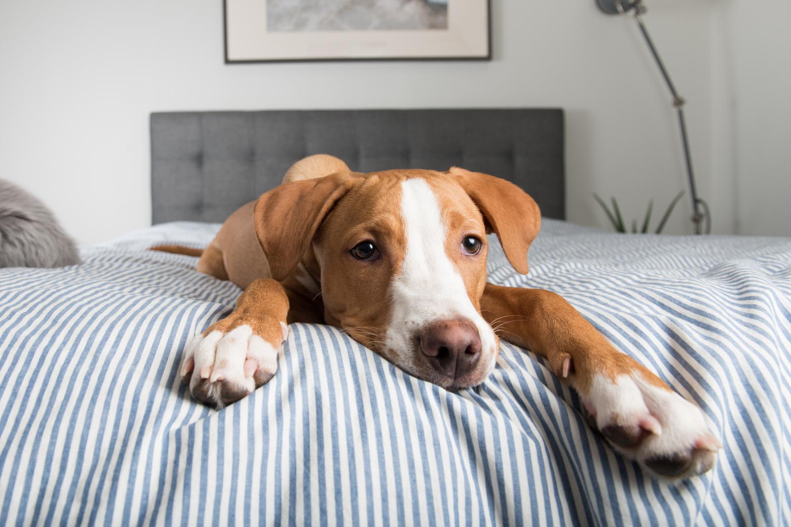Vrlo je važno da pas ne povezuje prestanak vašeg druženja i vaš izlazak iz kuće.