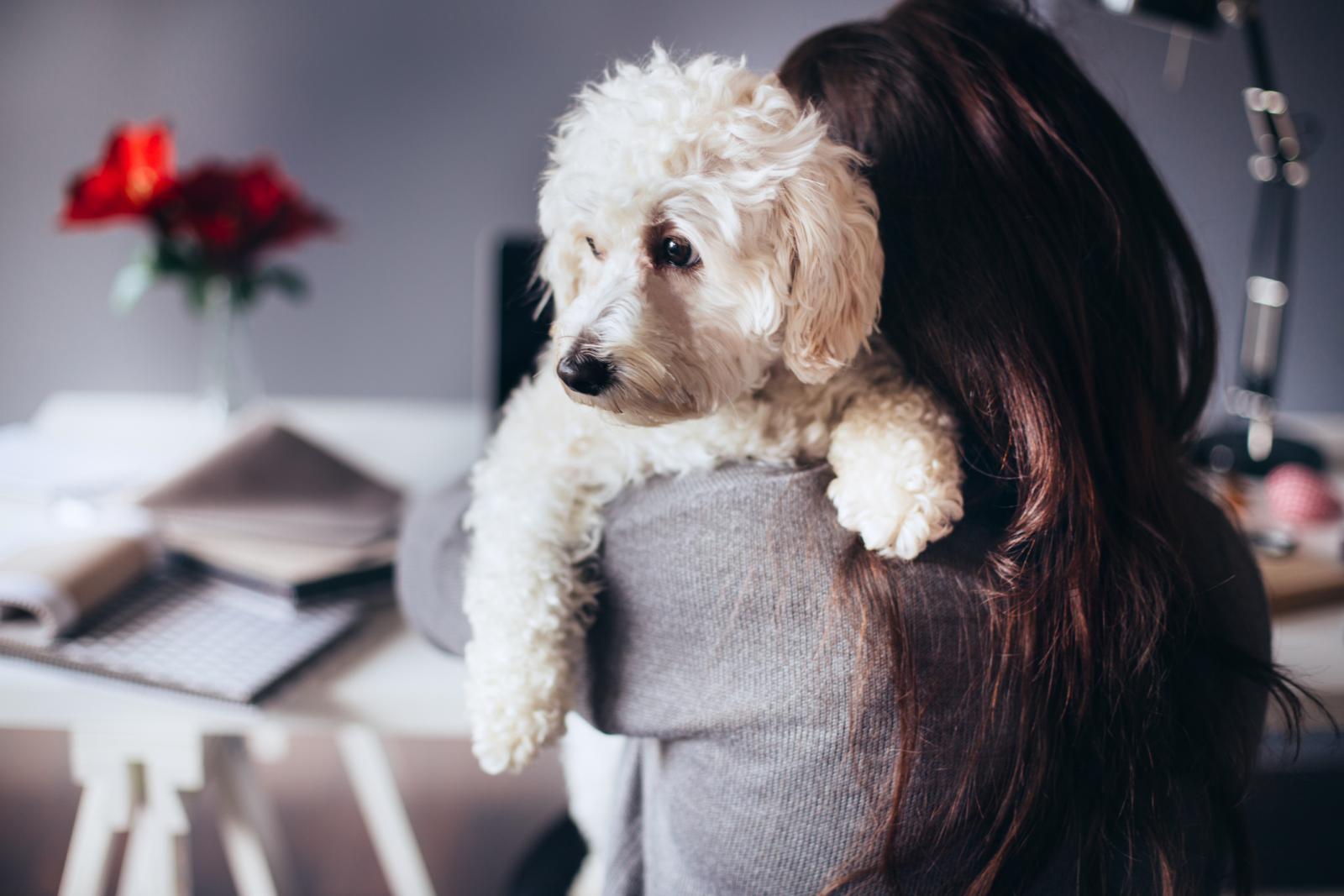 Umjesto otvaranja još jednog korisničkog računa, možda je bolje da nabavite kućnog ljubimca.