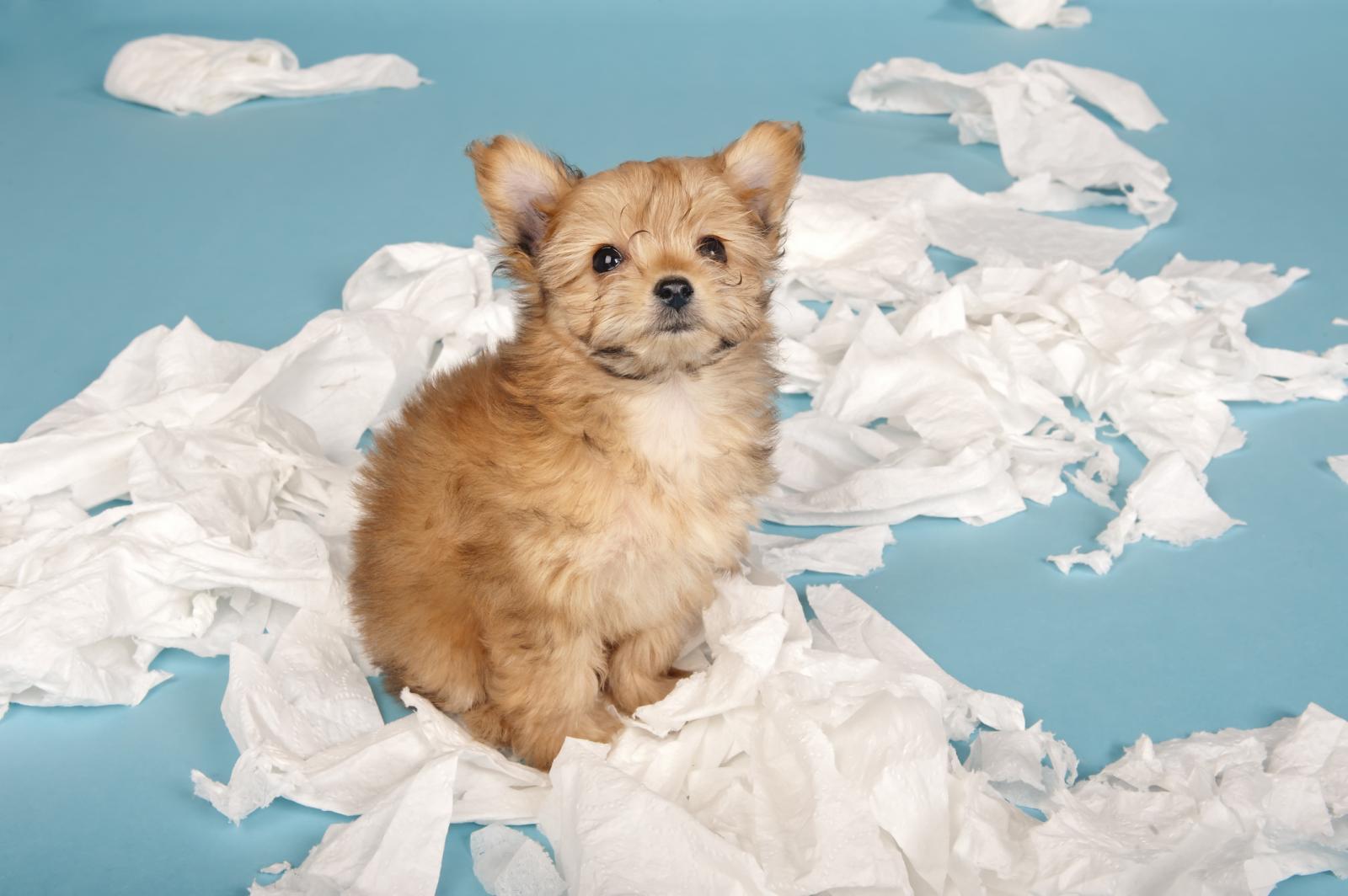 Nikad ne zaboravite - kazna ne ubrzava proces učenja kod šteneta niti mu pomaže da se smiri!
