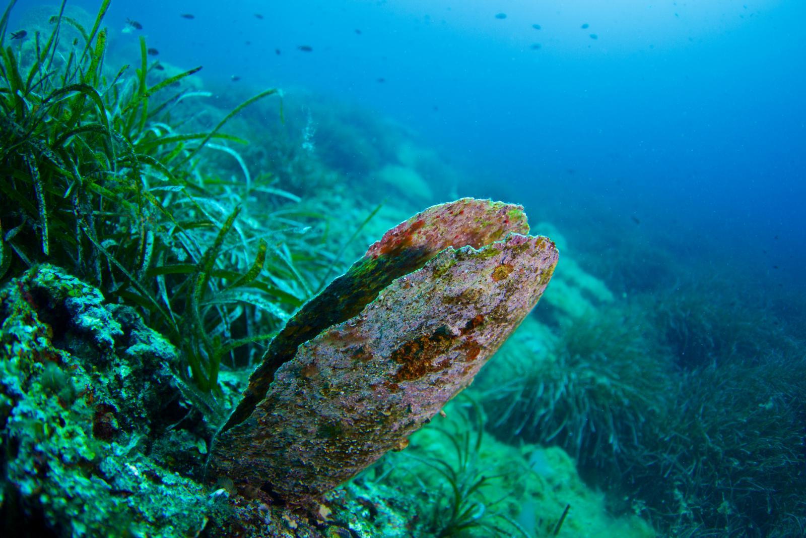 Perisku se smatra indikatorom zdravlja oceana jer njihove dugovječne ljušture bilježe kemijske i fizičke promjene u vodi.