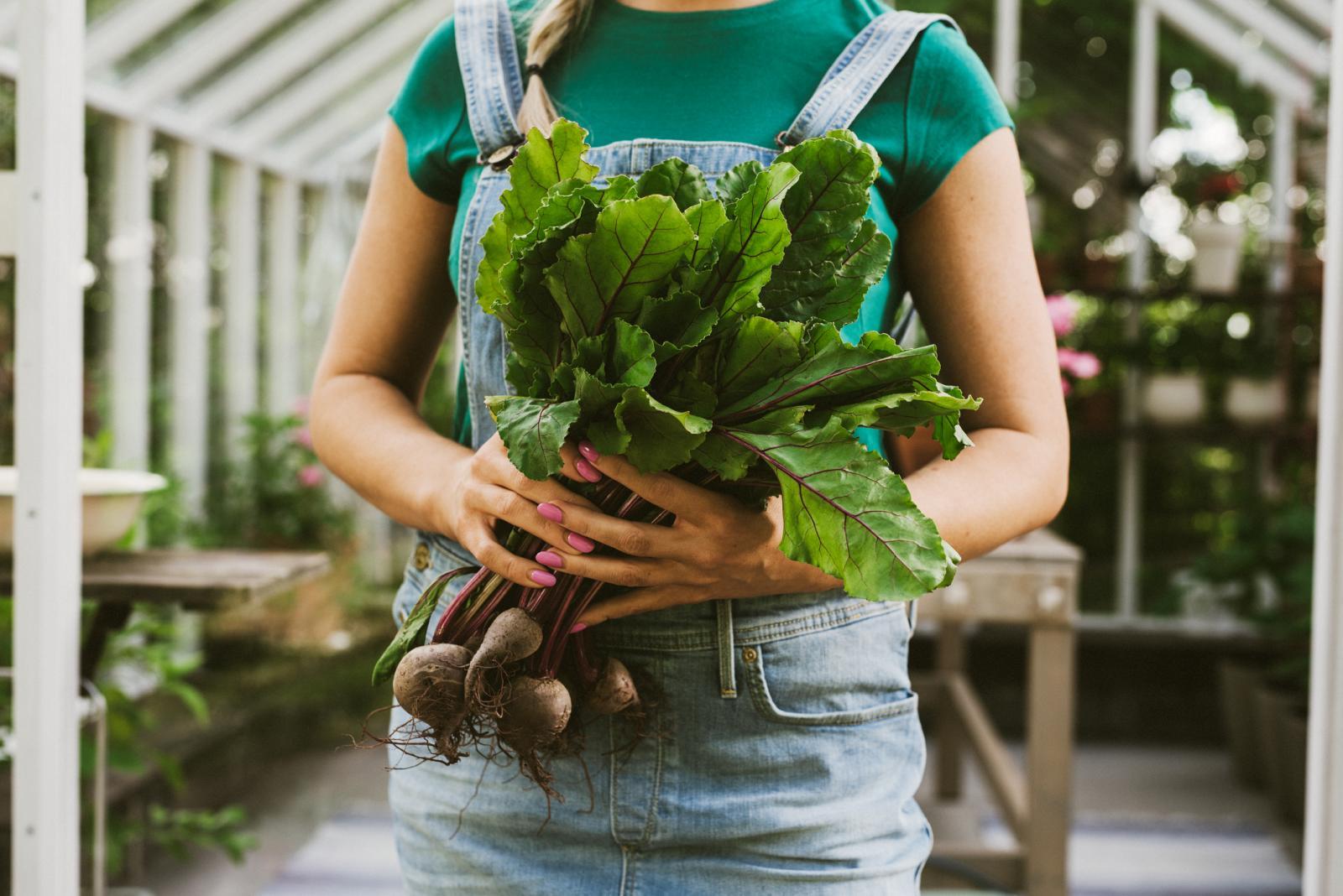 Listovi cikle bogatiji su nutrijentima od obožavanog korijena.