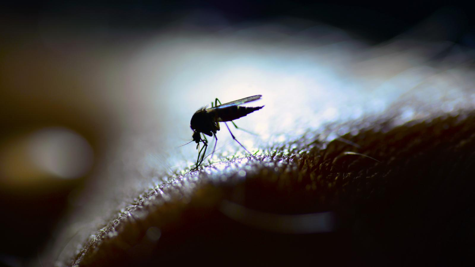Pouzdane zaštite nema, no sprejevi protiv uboda insekata ipak mogu pomoći.