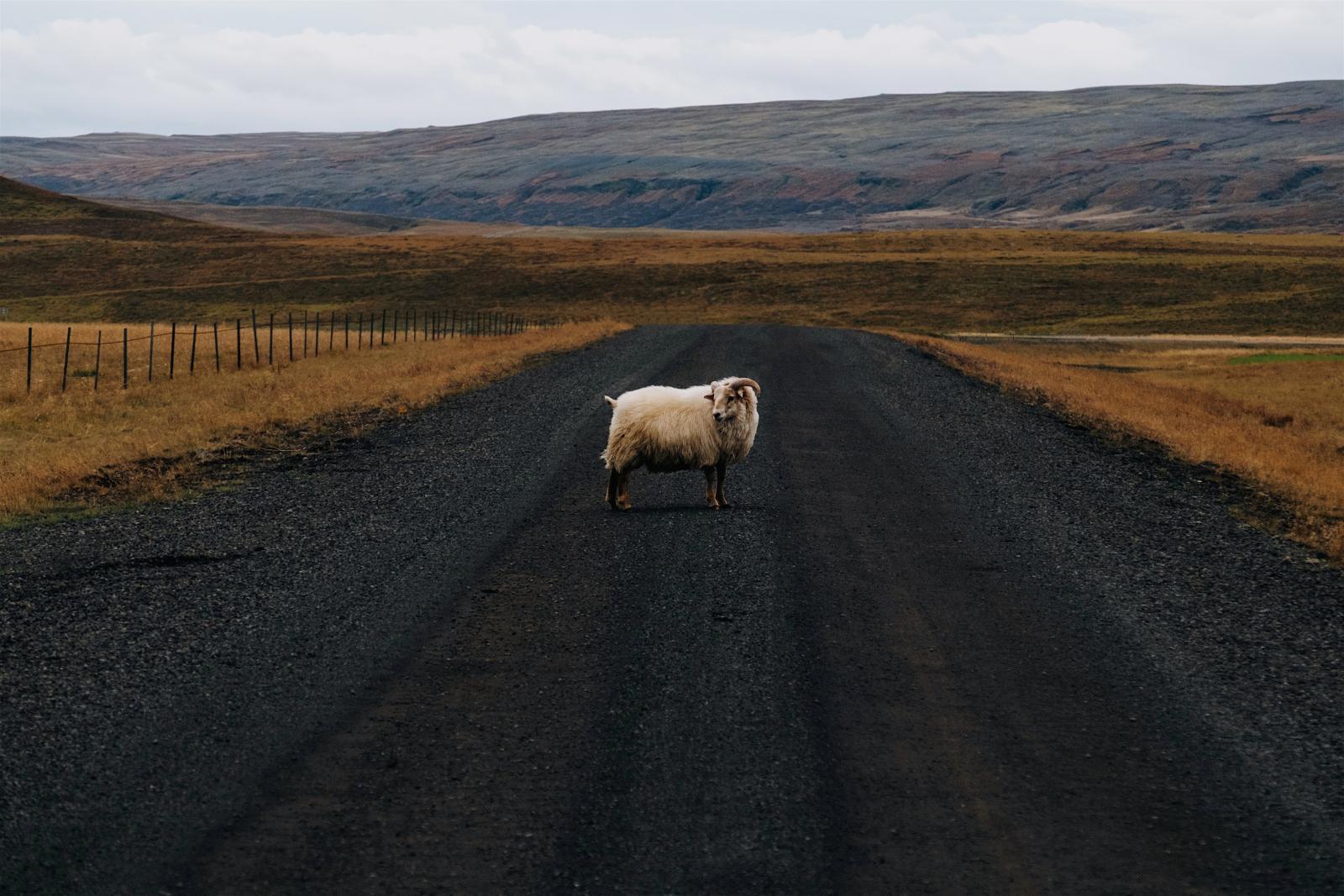 Ne moramo baš uvijek biti ovce :)