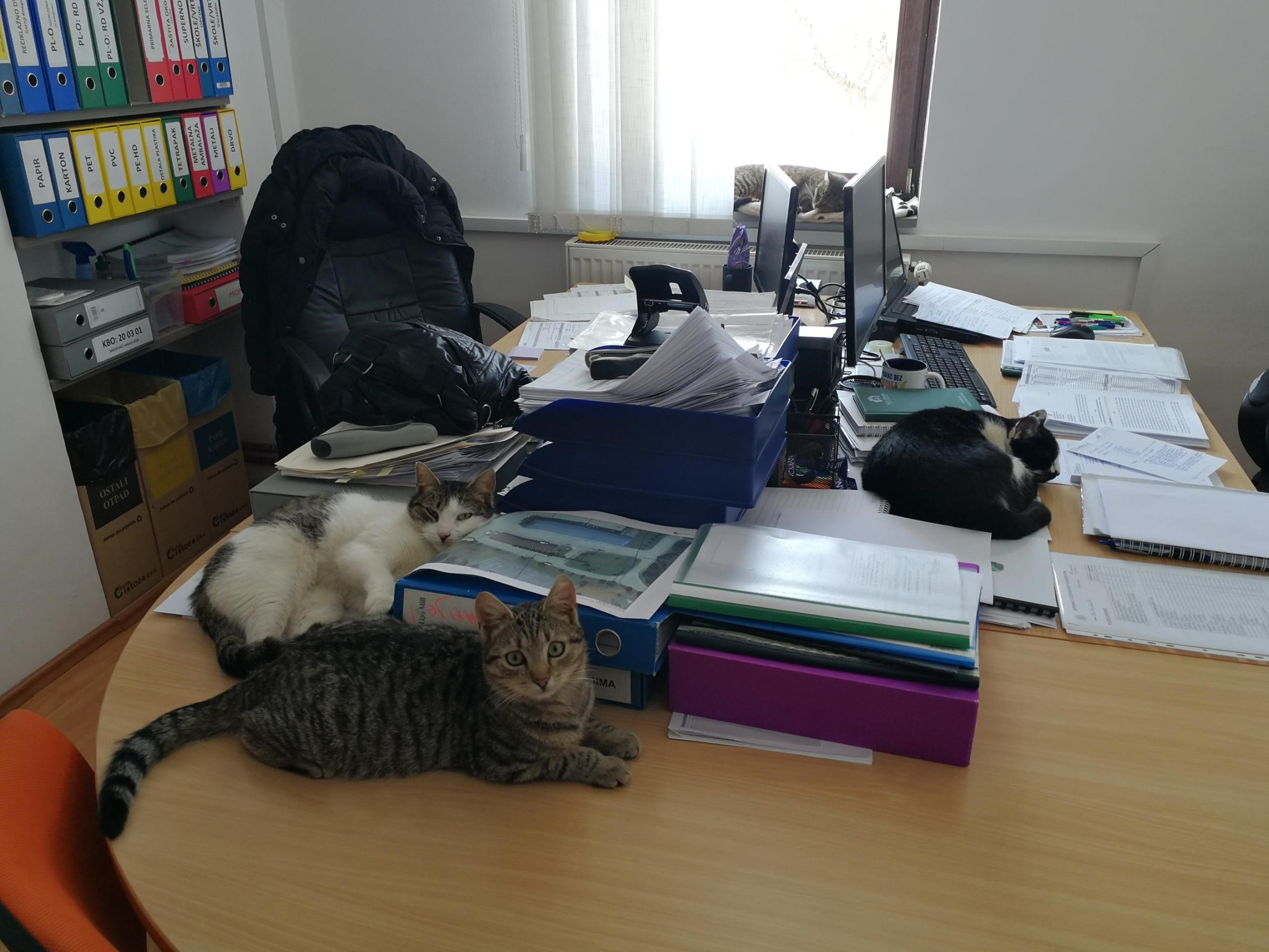 Uredske mace Čistoće
