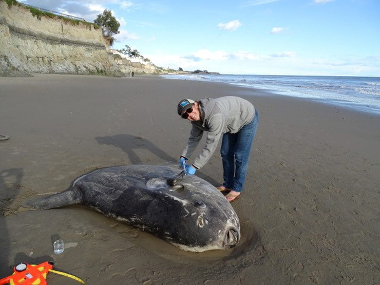 Jessica Nielsen poses next to a hoodwinker sunfish on a beach in Santa Barbara, California, U.S., February 21, 2019, in this picture obtained from social media.   Thomas Turner via REUTERS      ATTENTION EDITORS - THIS IMAGE HAS BEEN SUPPLIED BY A THIRD PARTY. MANDATORY CREDIT. NO RESALES. NO ARCHIVES.