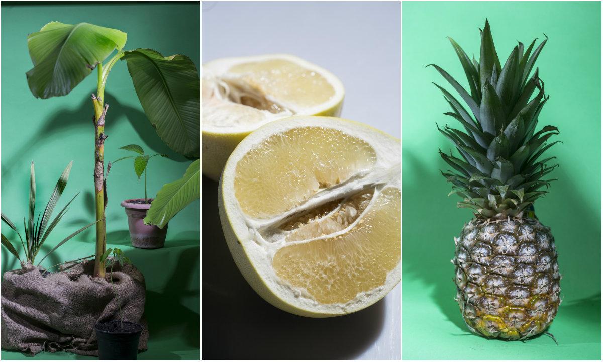 Tropsko voće collage
