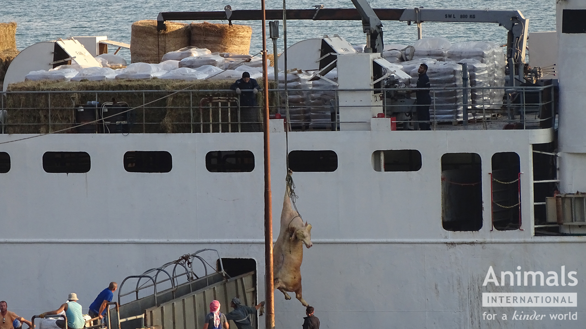 39806_2018_Port_of_Rasa_bull_cranedon_vessel_