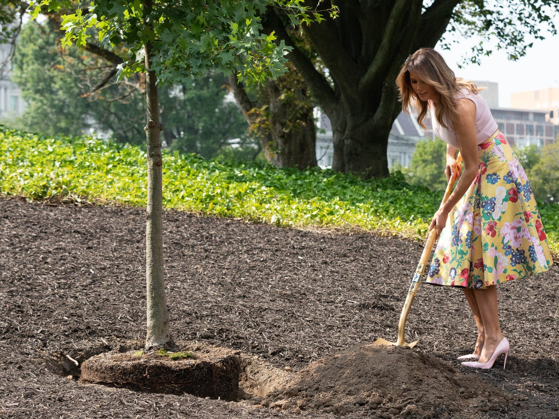 First Lady Melania Trump participates in a White House Historical Association tree planting on the South Lawn of the White House. The sapling was taken from the Eisenhower Oak located near the Kennedy Garden | August 27, 2018 (Photo by Andrea Hanks/White House)    Please note: Fees charged by the agency are for the agency's services only, and do not, nor are they intended to, convey to the user any ownership of Copyright or License in the material. The agency does not claim any ownership including but not limited to Copyright or License in the attached material. By publishing this material you expressly agree to indemnify and to hold the agency and its directors, shareholders and employees harmless from any loss, claims, damages, demands, expenses (including legal fees), or any causes of action or allegation against the agency arising out of or connected in any way with publication of the material., Image: 385279332, License: Rights-managed, Restrictions: *** Editorial Use Only ***, Model Release: no, Credit line: Profimedia, SIPA USA