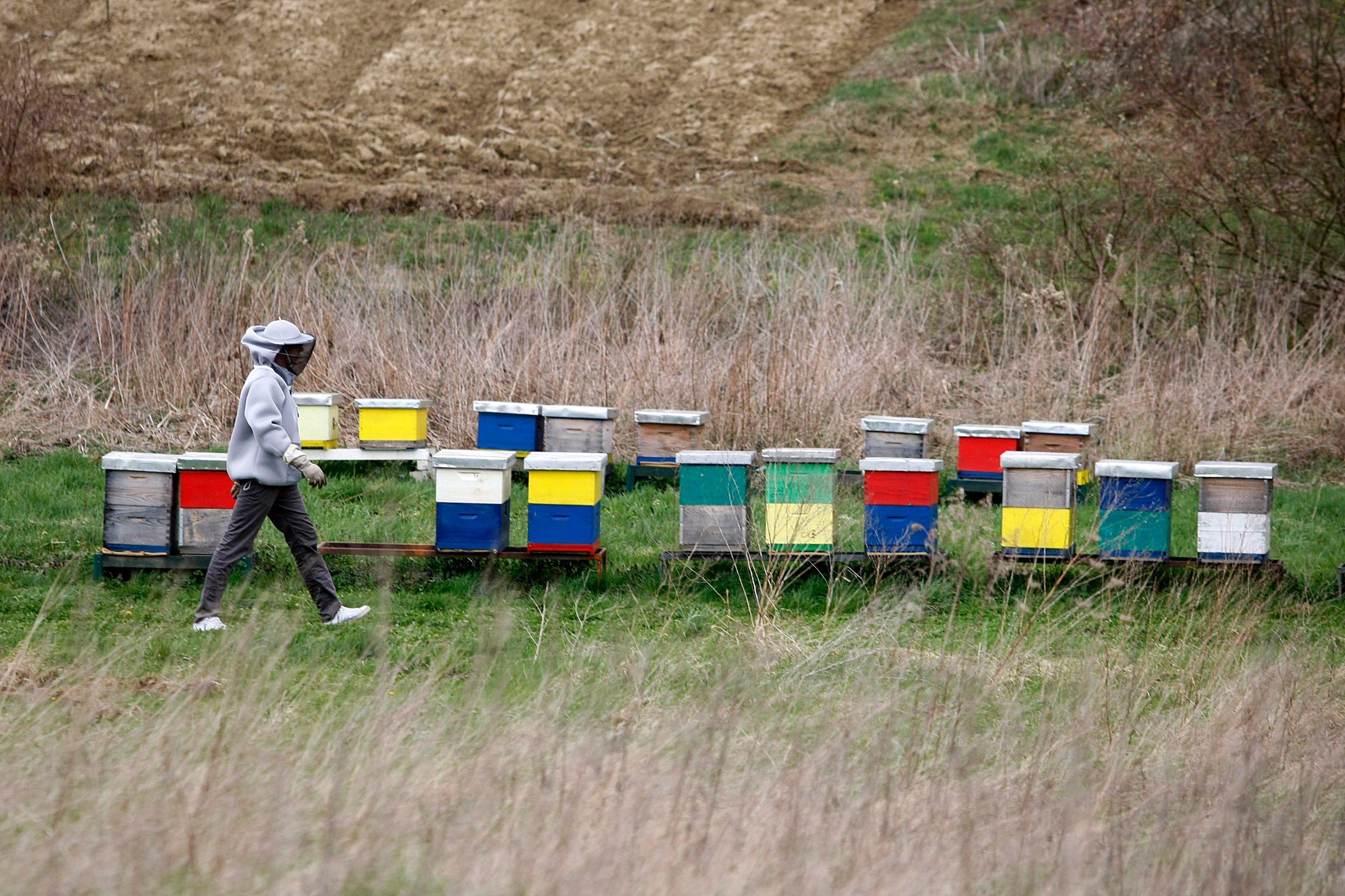 Daruvar, 280319. Mladi poljoprivrednik Tvrtko Matijevic.  Foto: Ranko Suvar / CROPIX