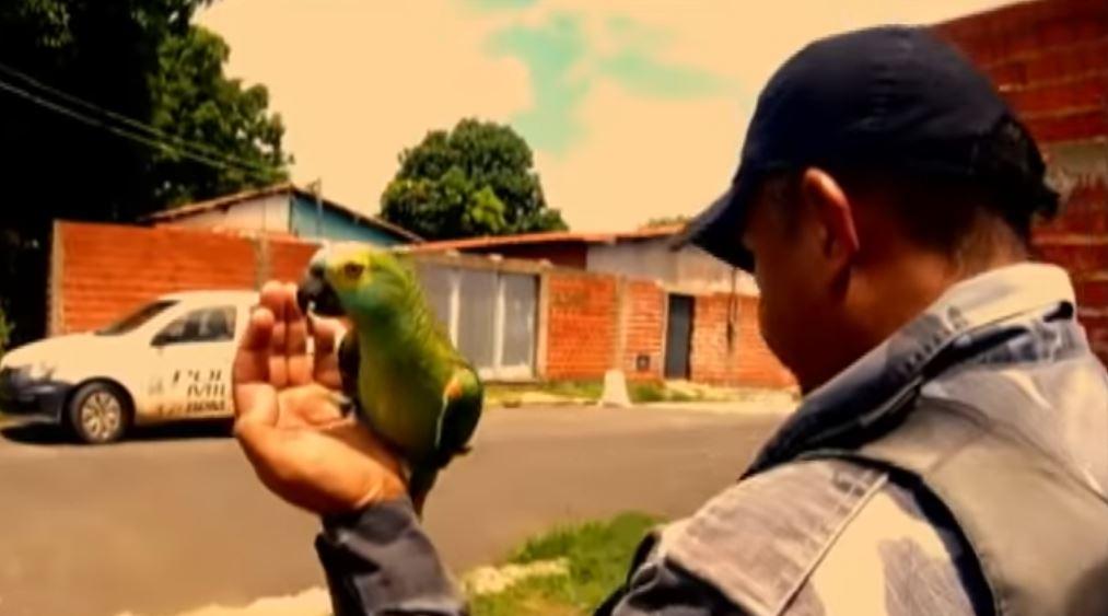 papiga dilerica