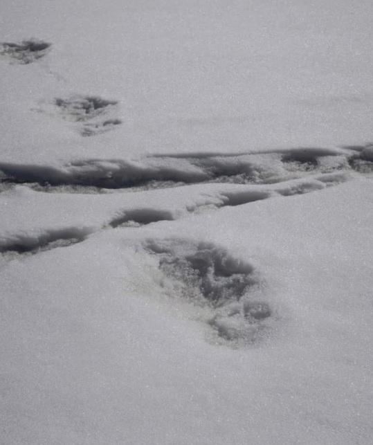 Fotografija otisaka u snijegu za koje indijska vojska tvrdi da pripadaju Jetiju.