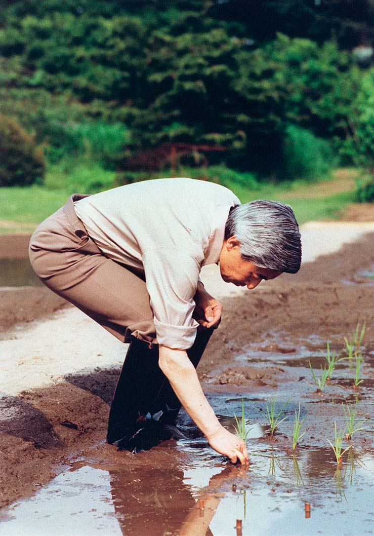 Japanese Emperor Akihito transplants rice seedlings in a paddy field inside the Imperial Palace May 26, 1992. Reaped in fall, the rice is usually offered to the gods during harvest festival in October and November., Image: 68435920, License: Rights-managed, Restrictions: , Model Release: no, Credit line: Profimedia, AFP