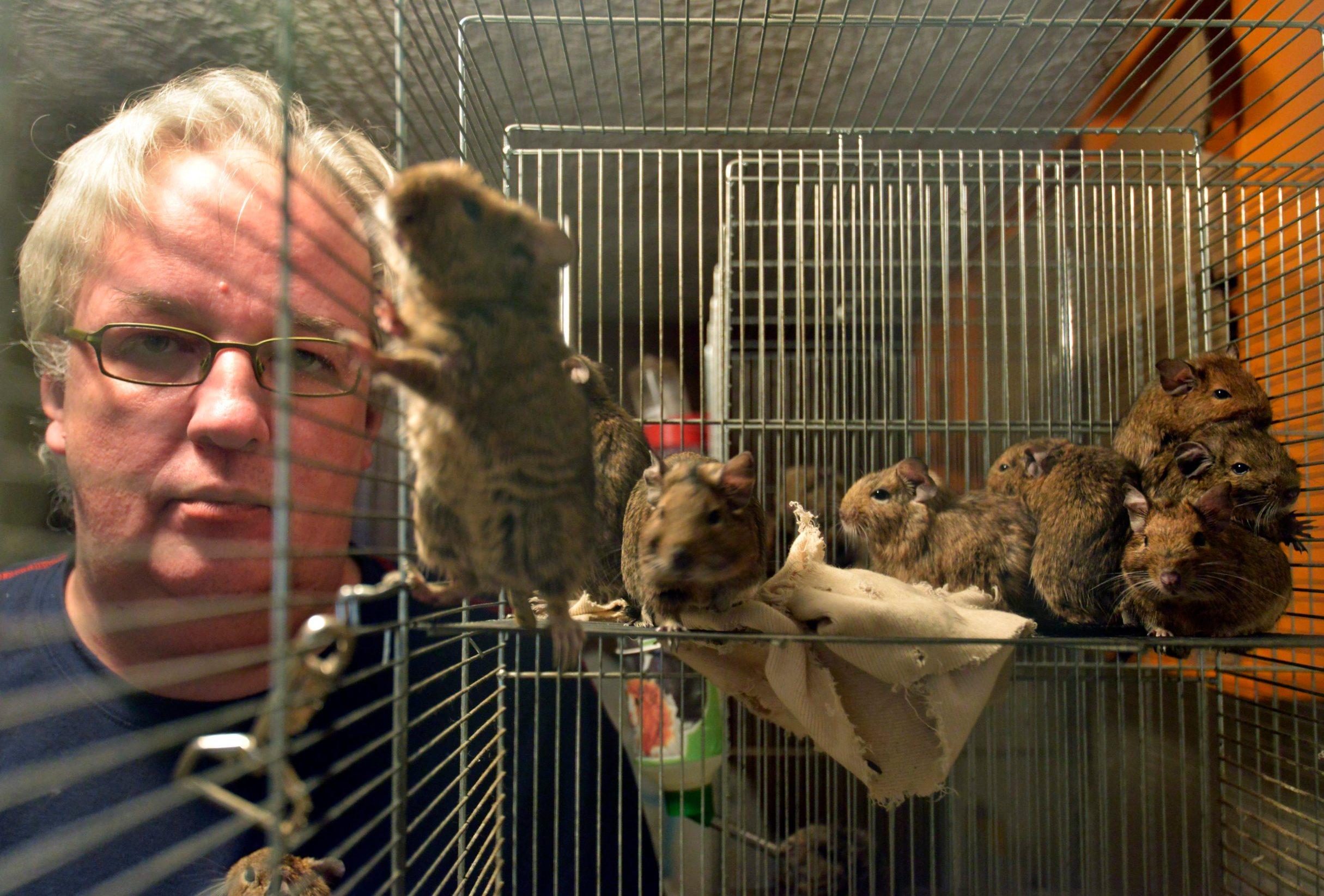 Boris Perić u društvu svojih kućnih ljubimaca čileanskih vjeverica