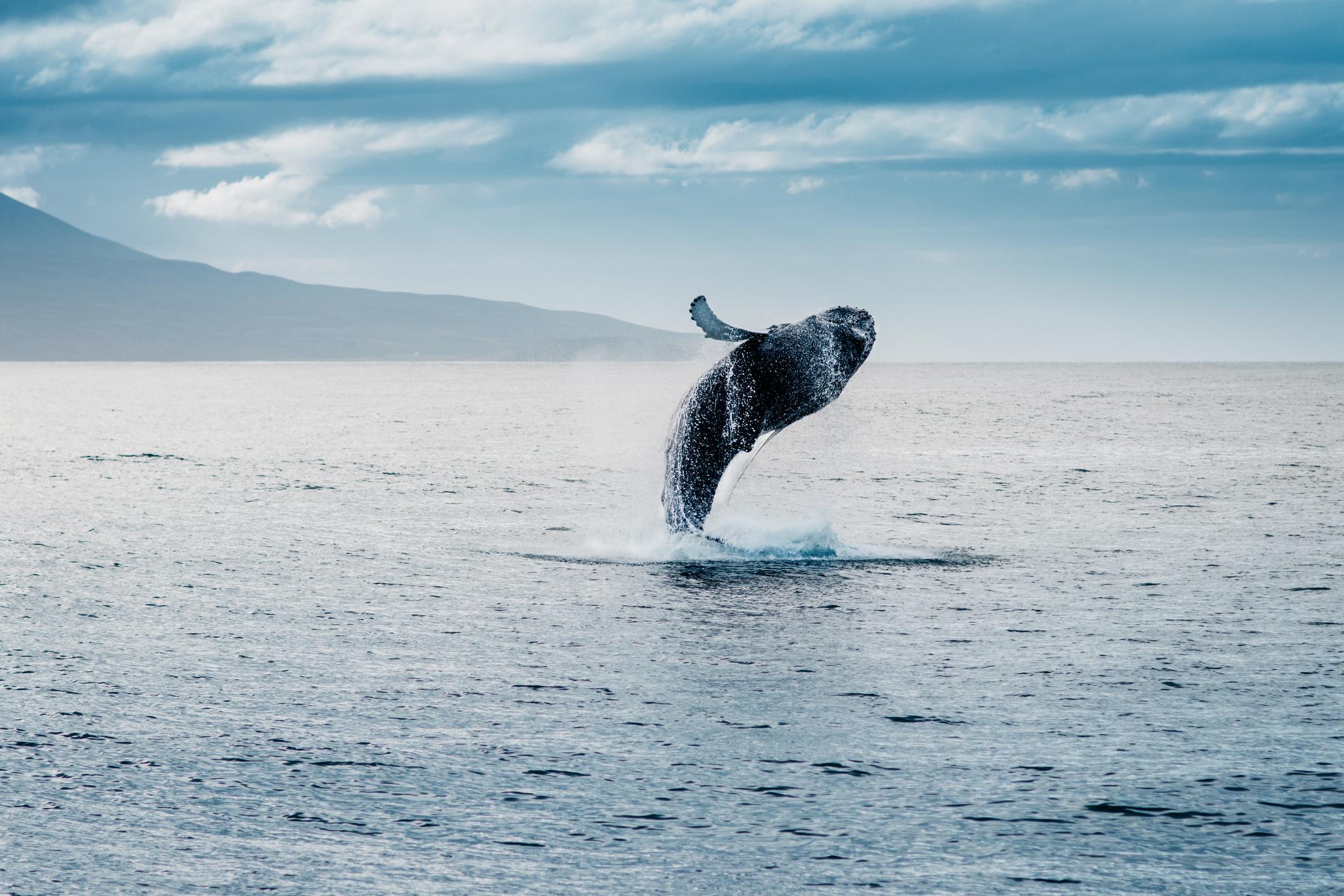 Čovjek nije ugrožen, ali zbog ovog otkrića u opasnosti su morske životinje.