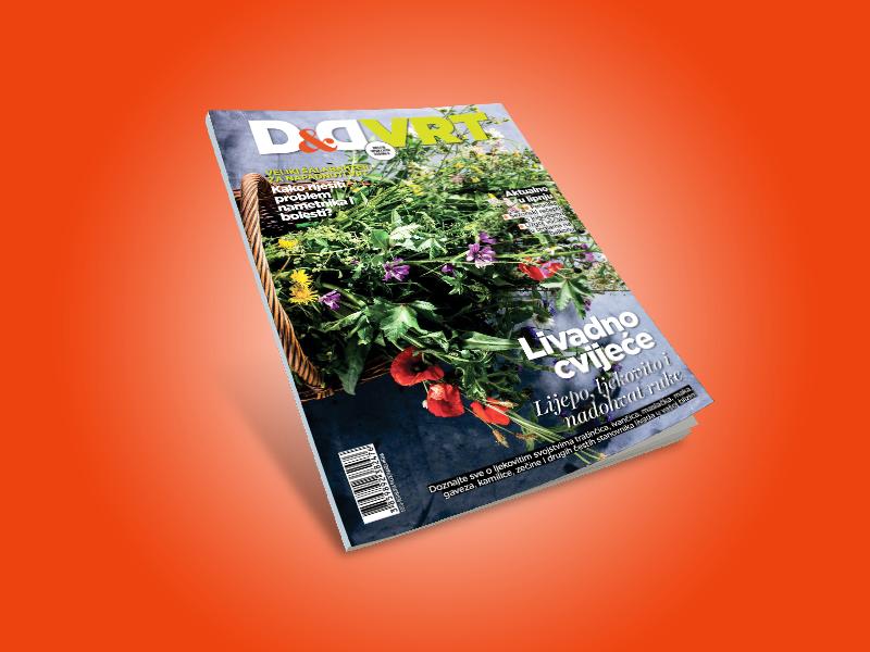 D&Dvrt800X600_V3