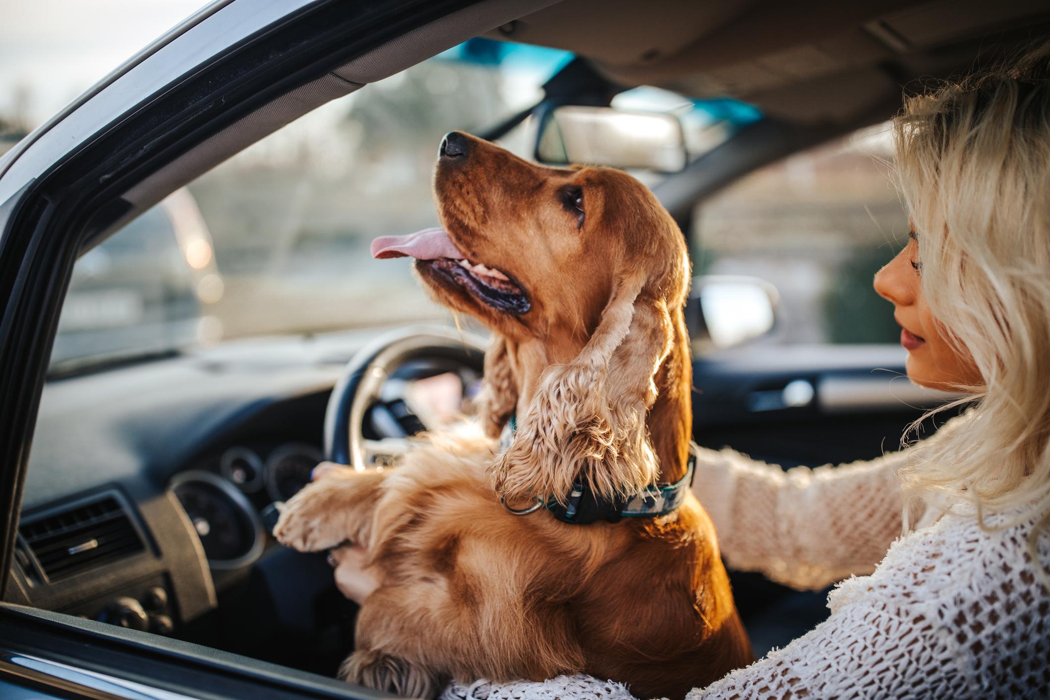 Mentalno stanje vlasnika oblikuje emocionalno zdravlje psa.